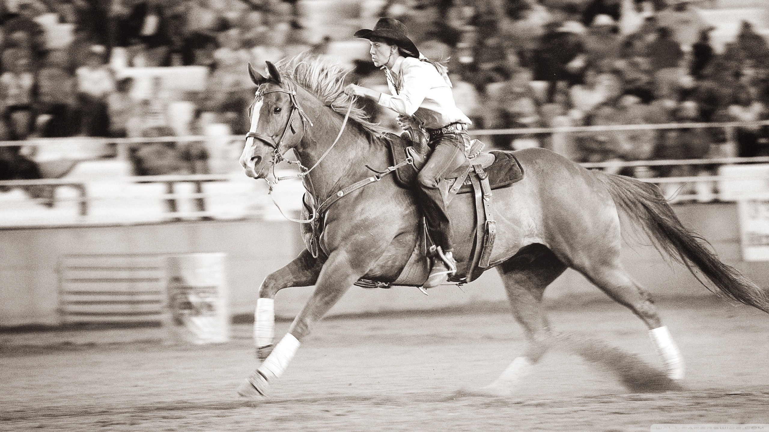 Barrel Racer Quotes 63 Quotes
