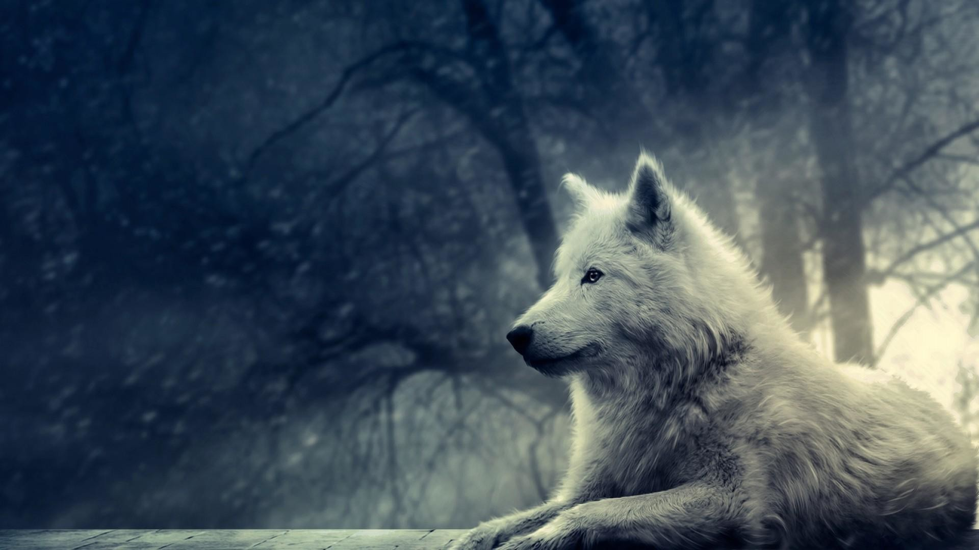 wolf backgrounds for desktop (64+ images)
