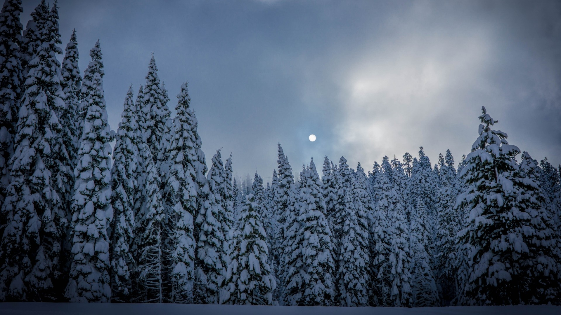 1920x1080 Preview wallpaper winter, fir, snow, forest