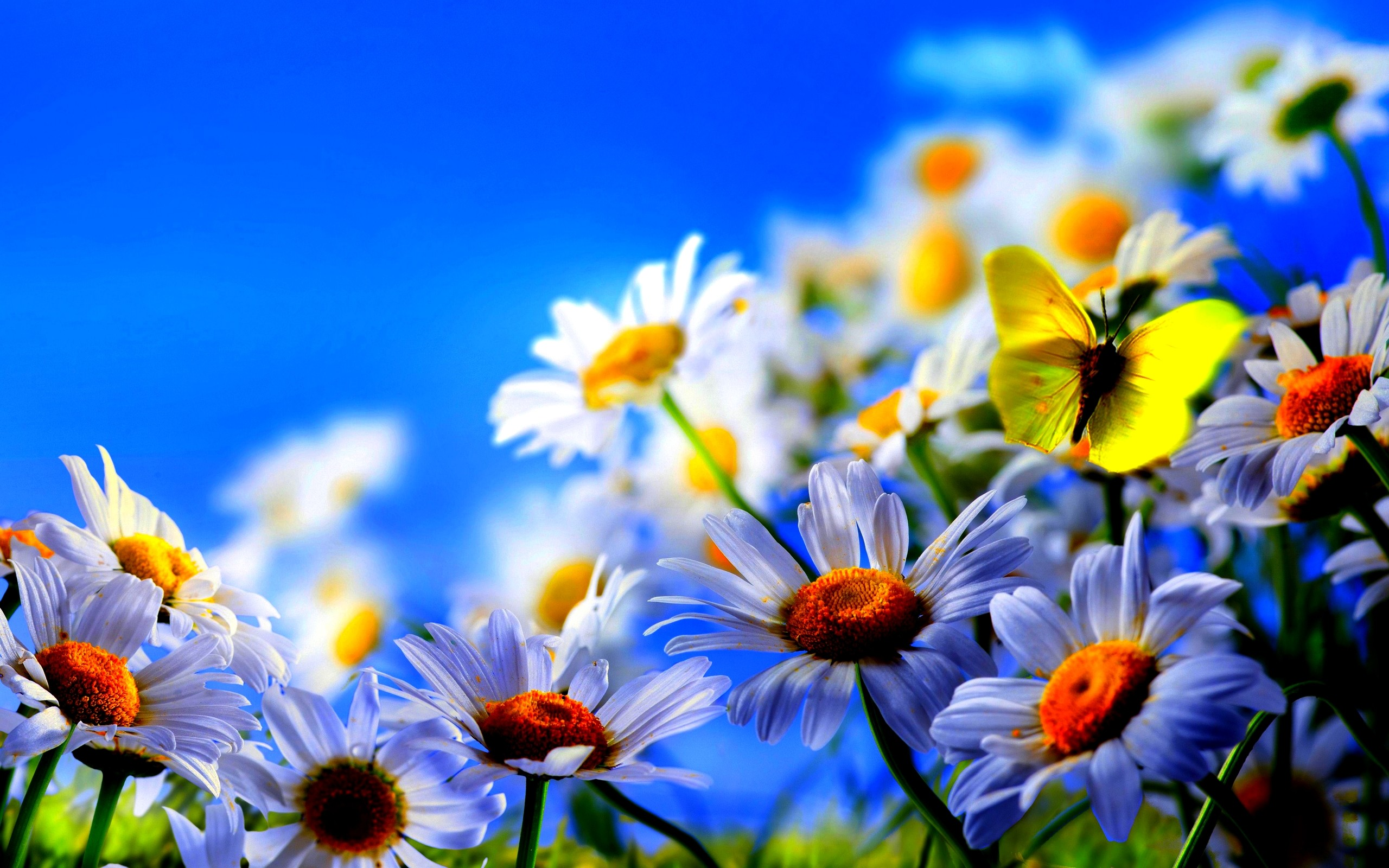 2560x1600 spring flowers butterflies background hd Wallpaper HD