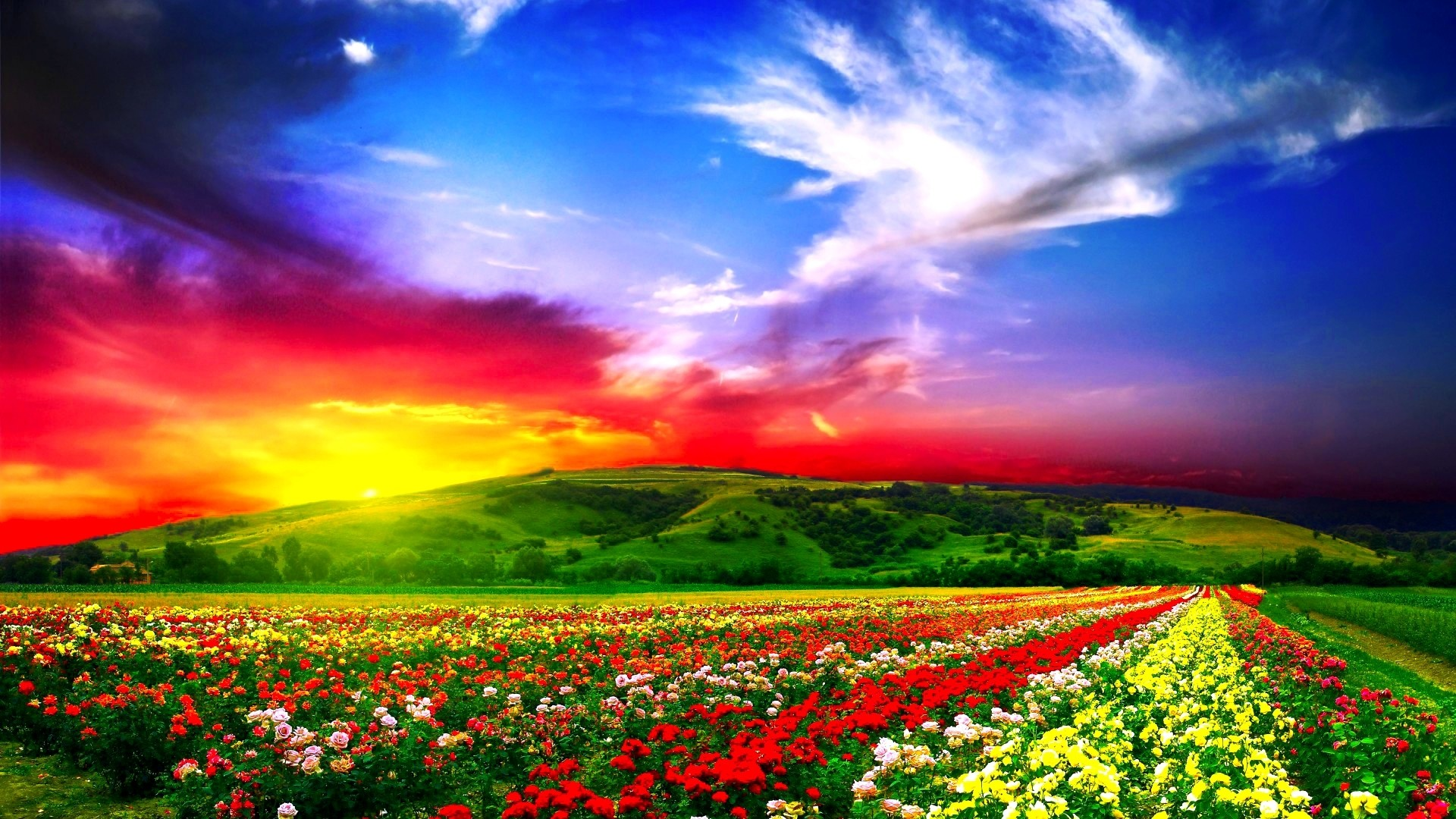1920x1080  Wallpaper flowers, field, beautiful