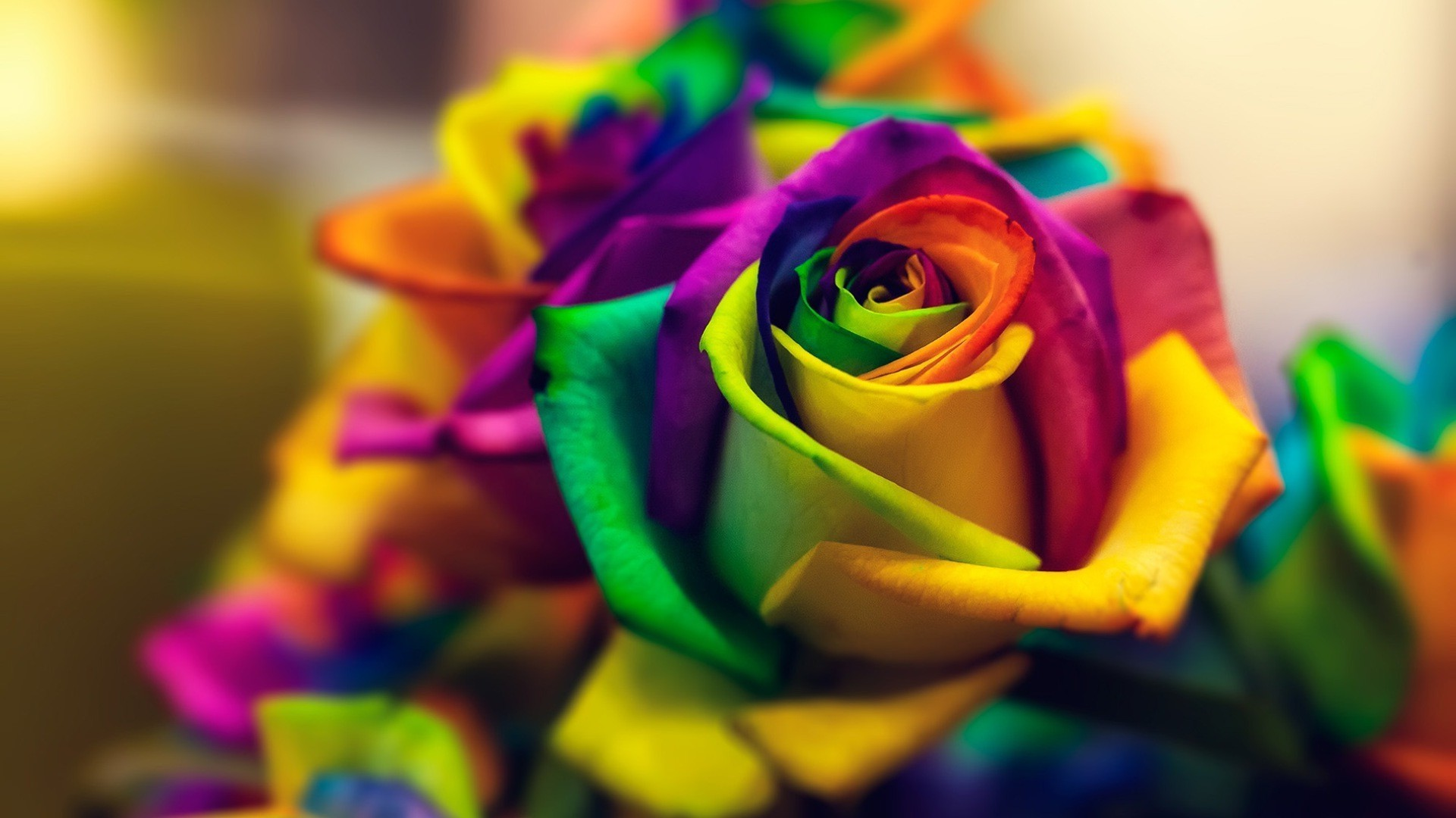 Free Colorful Flower Wallpaper Downloads: Rainbow Roses Wallpaper (48+ Images