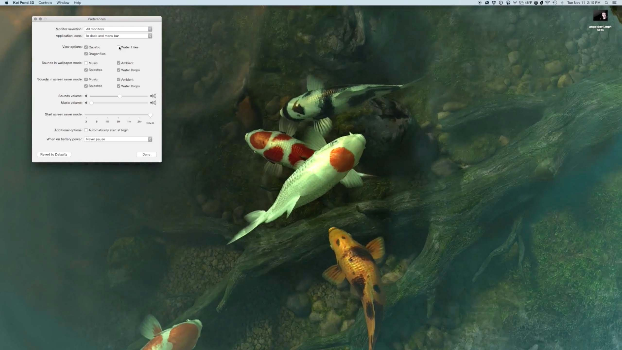 2560x1440 ASMR Live Desktop Demo: Sharks 3D and Koi Pond 3D with water sounds -  YouTube