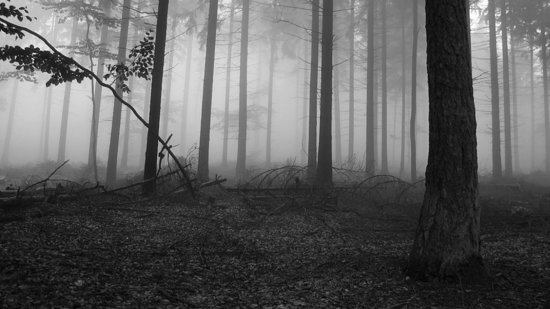 1920x1080 Lone Tree Wallpapers Black And White Top 2560×1440. Nature trees fog  wallpaper HD.