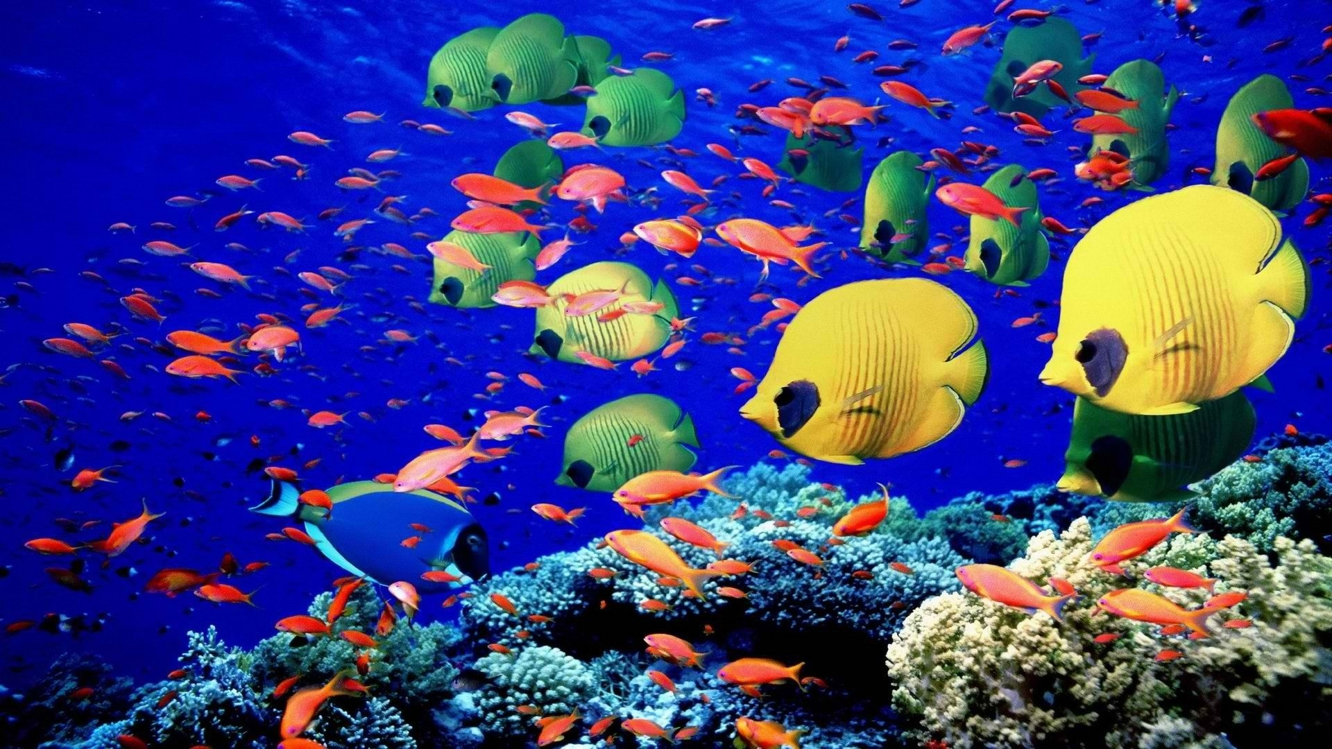 1920x1080 Colorful Coral Reef Wallpaper Full HD #vbp