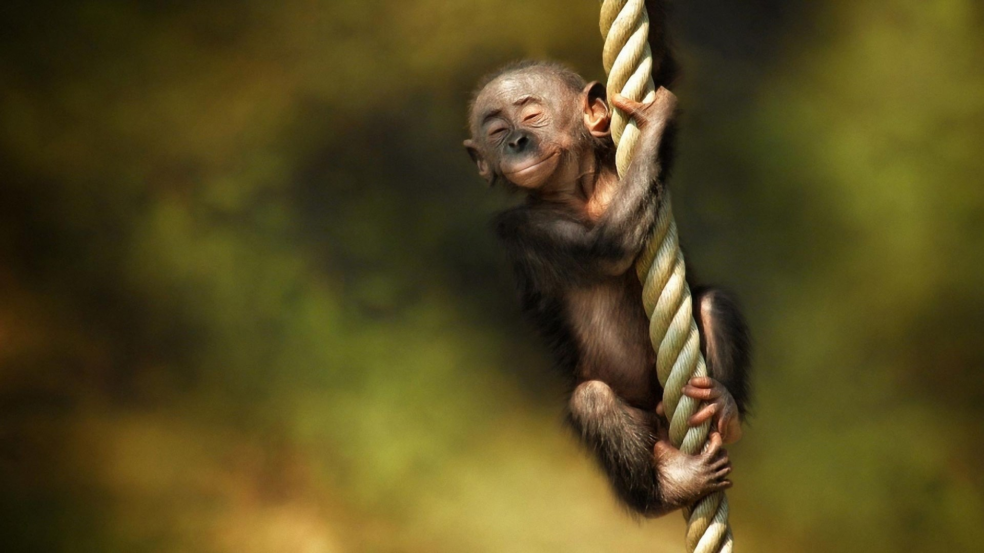 1920x1080 Full HD p Monkey Wallpapers HD Desktop Backgrounds x 1920×1080
