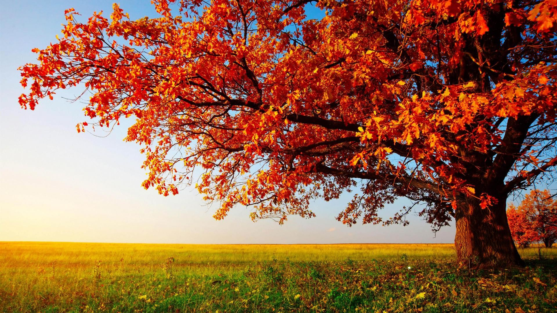 Autumn hd widescreen wallpaper 71 images 1920x1080 beautiful autumn wallpaper for interior wall decor idea autumn leaves wallpaper with nice garden voltagebd Image collections