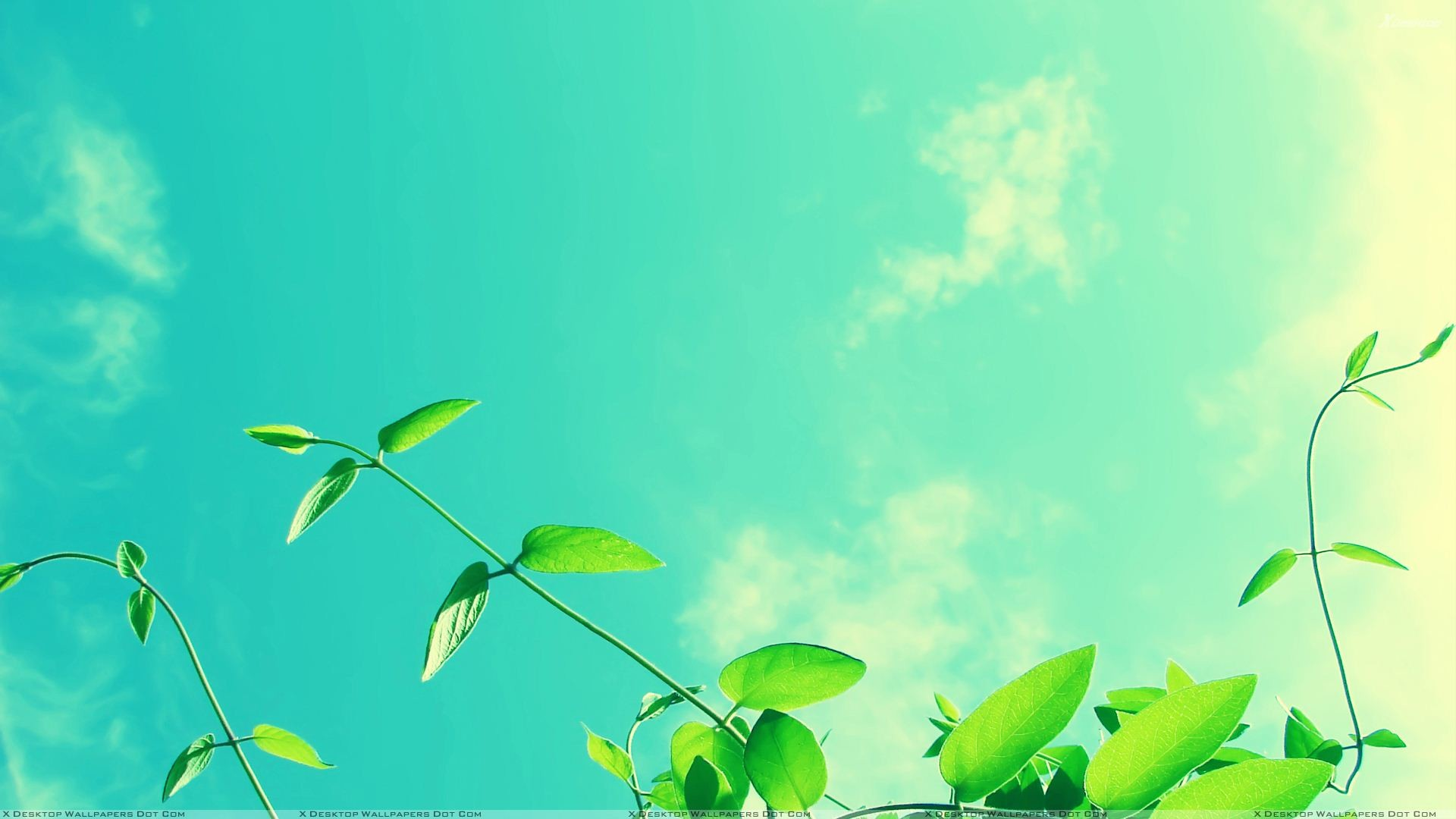 "1920x1080 You are viewing wallpaper titled ""Green Leaves And Blue Sky ..."