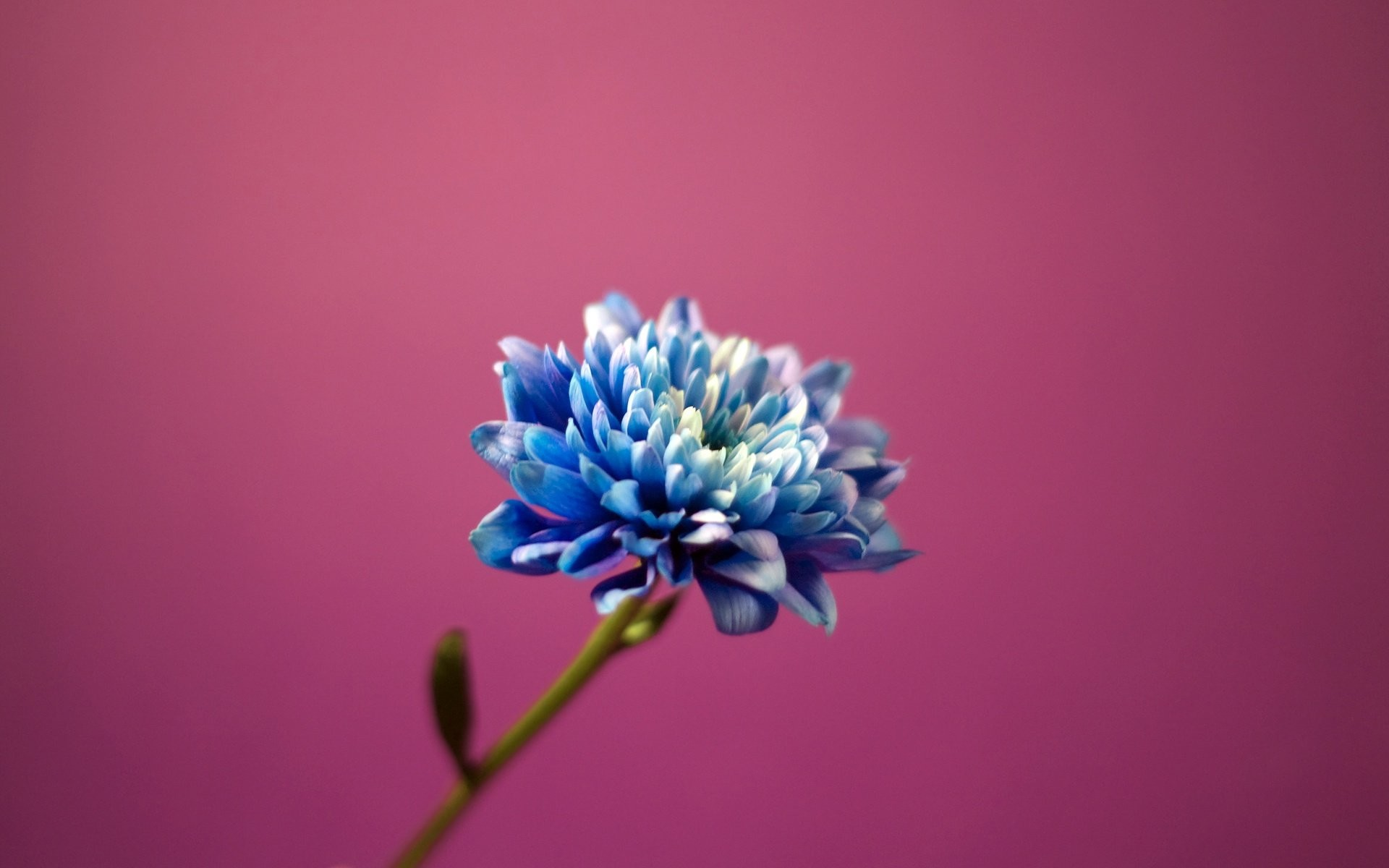1920x1200 Small Blue Flowers For Blue Purple Wallpaper Flowers Background Pictures  Against Small Blurred Flower