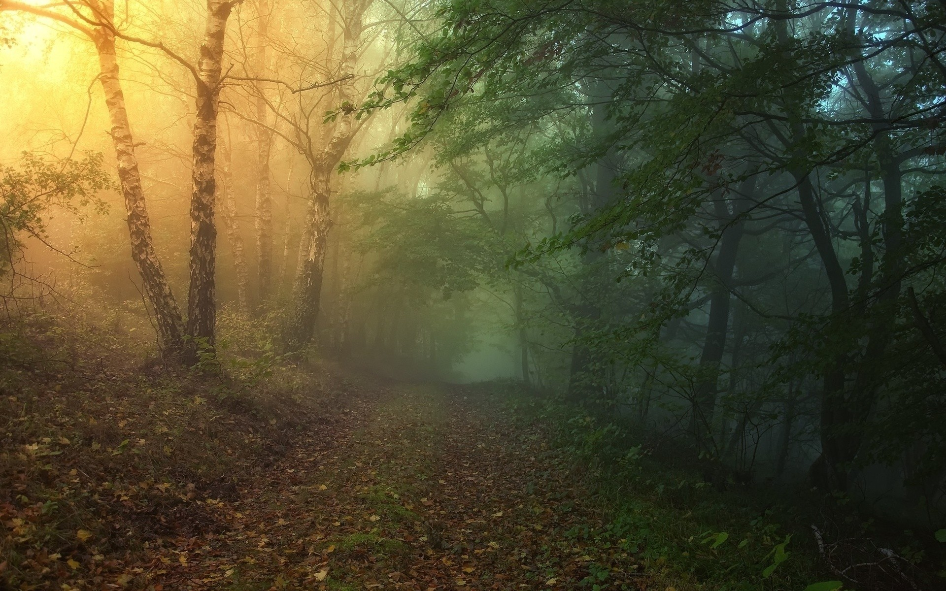 1920x1200 Magical Forest Path wallpapers and stock photos