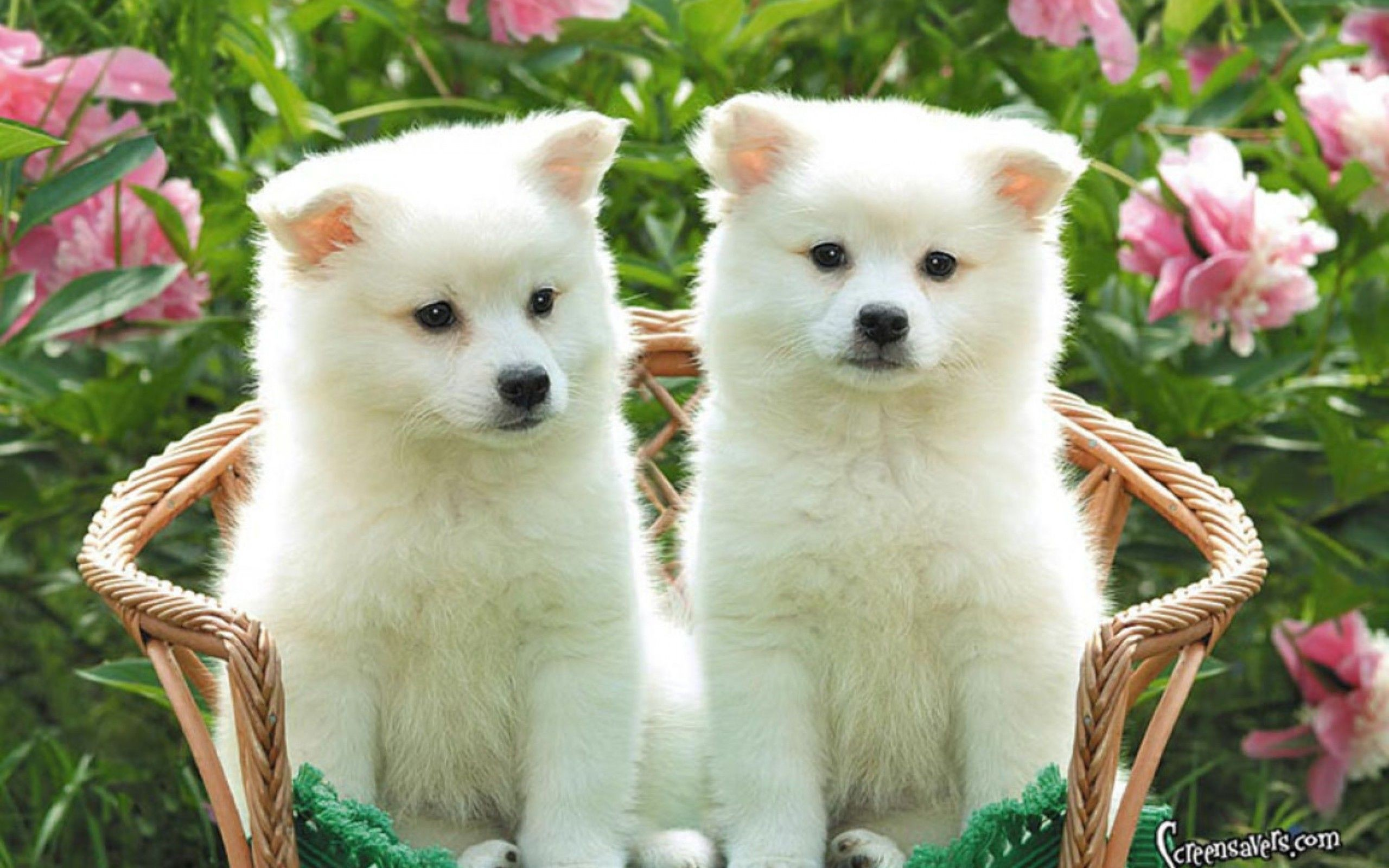 2560x1600 Puppies Together Hd Wallpaper For Desktop And Cute Kittens