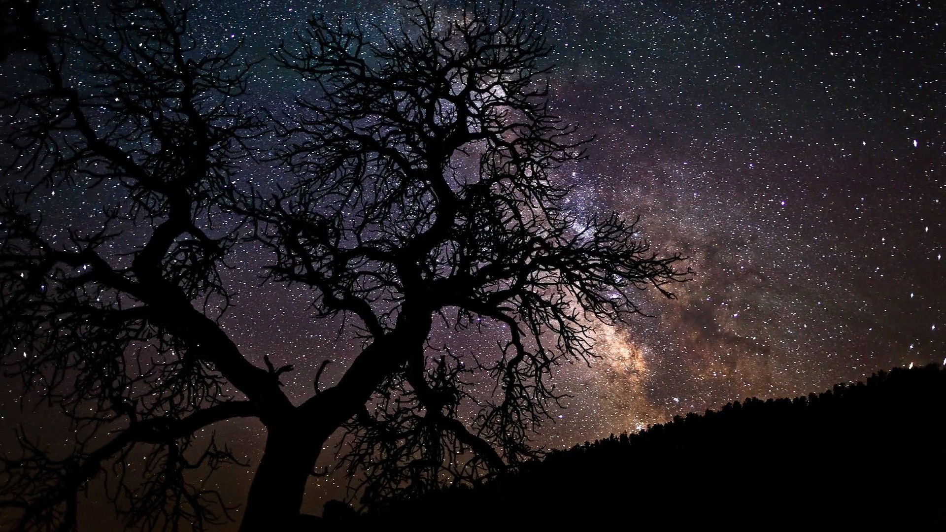 1920x1080 Sky-starry-night-sky-stars-nature-trees-wallpaper-