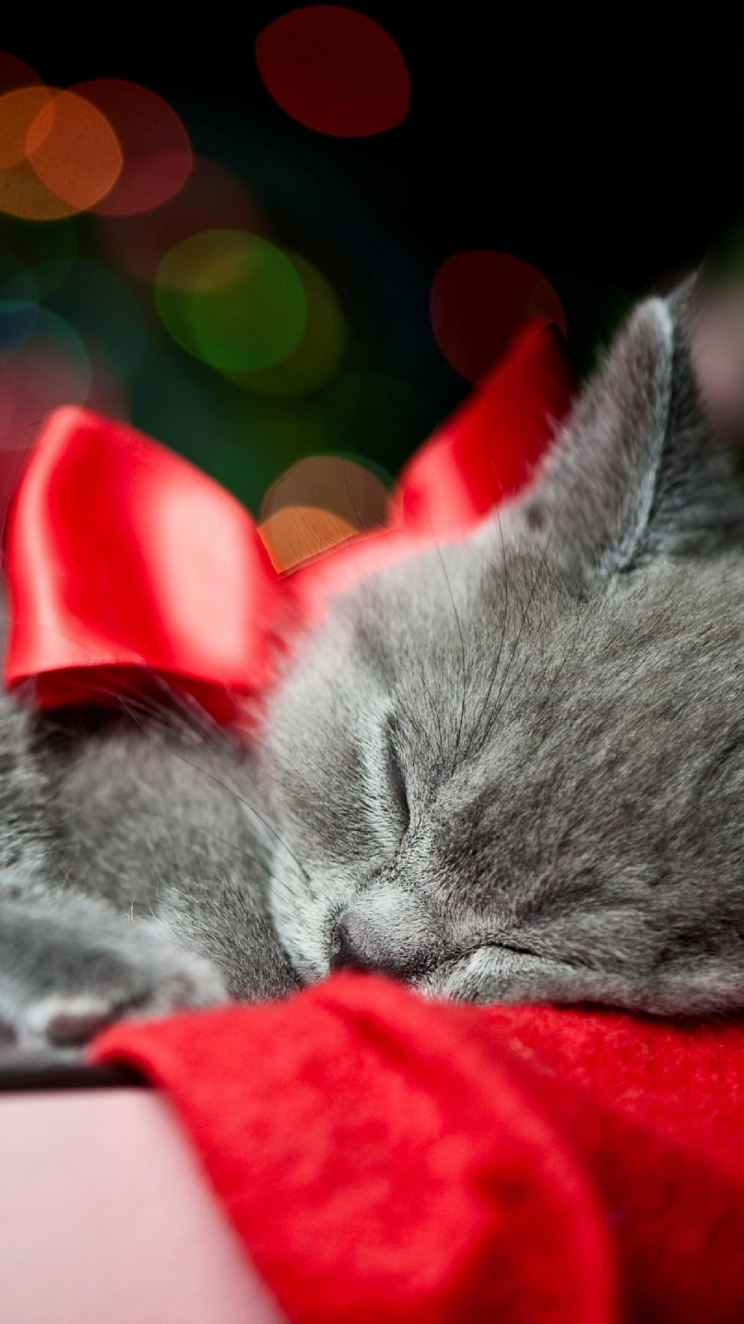 Valentine Cats Wallpaper (58+ images)