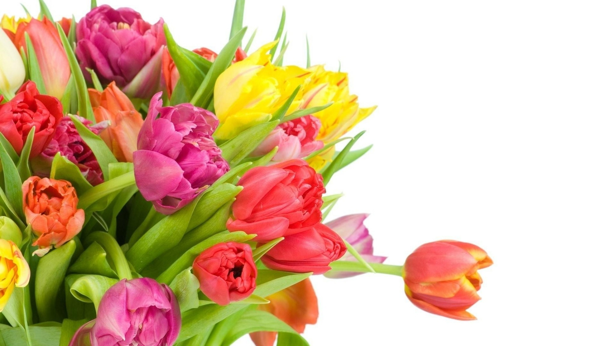 2048x1152  Wallpaper tulips, flowers, bouquet, bright, white background