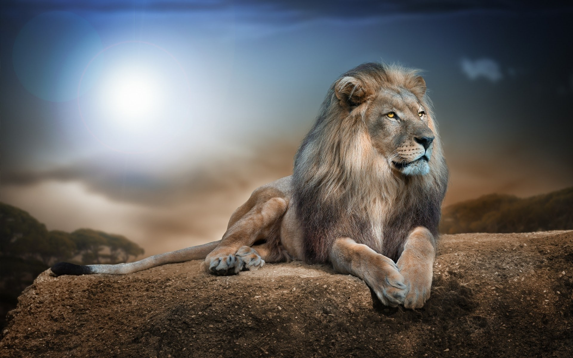 1920x1200 Lion HD pics Lion wallpapers hd