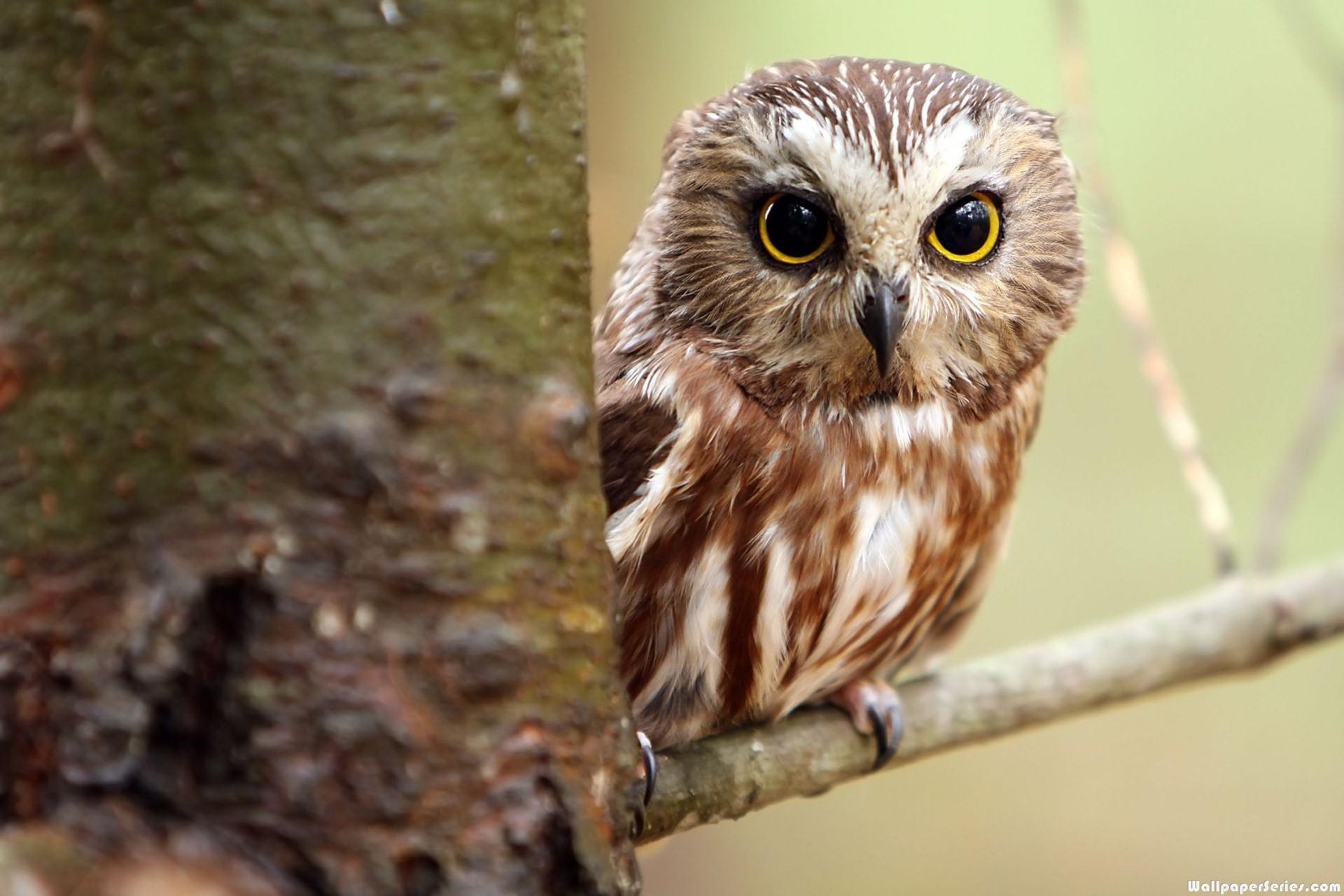 ZN B10 Moon Stars Owl Good Night Nursery Wallpaper Wall