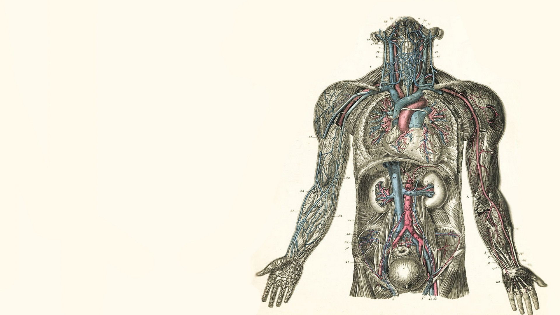 Anatomy Wallpaper Hd 63 Images