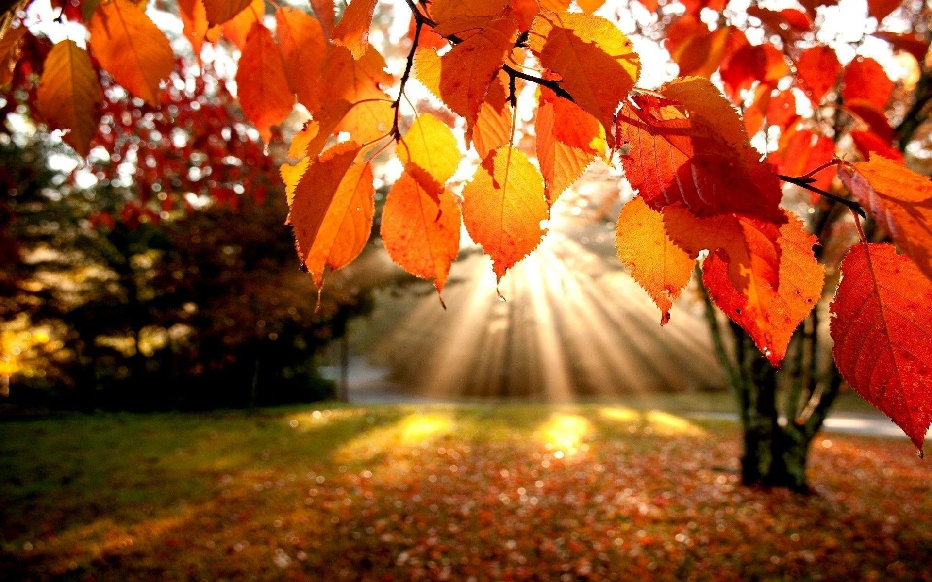Fall Leaves Wallpaper For Desktop 60 Images