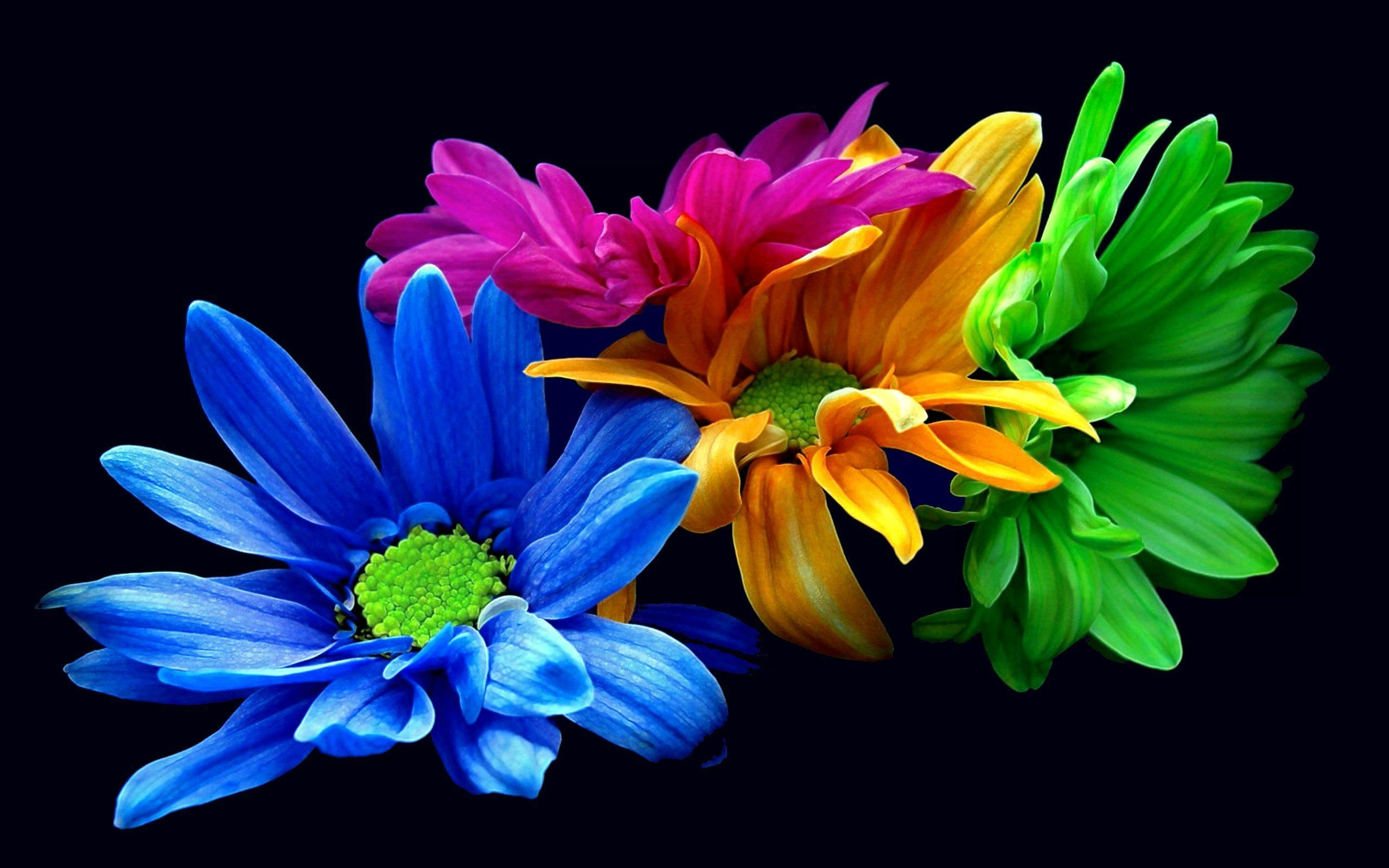 2560x1600 Colorful Flowers Dark Background Wallpapers | HD Wallpapers ...