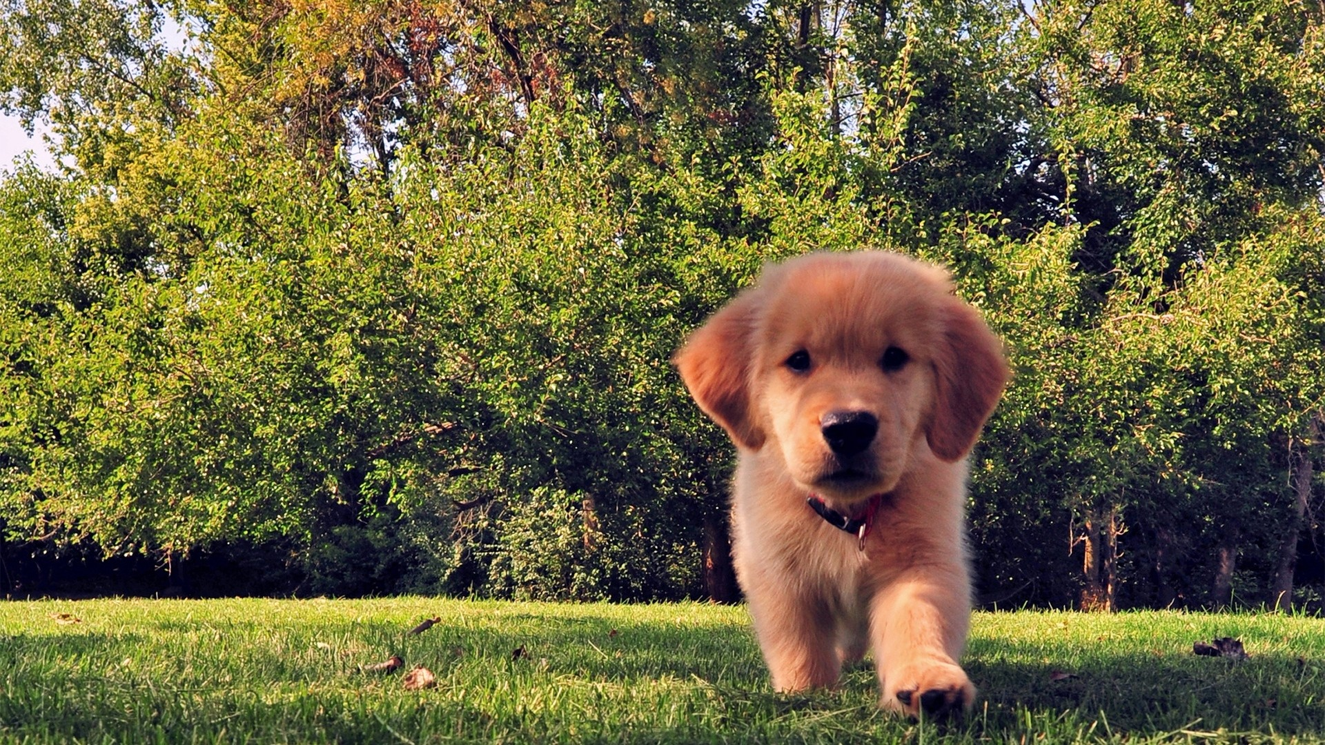 1920x1080 Preview wallpaper funny, summer, dog, puppy, grass