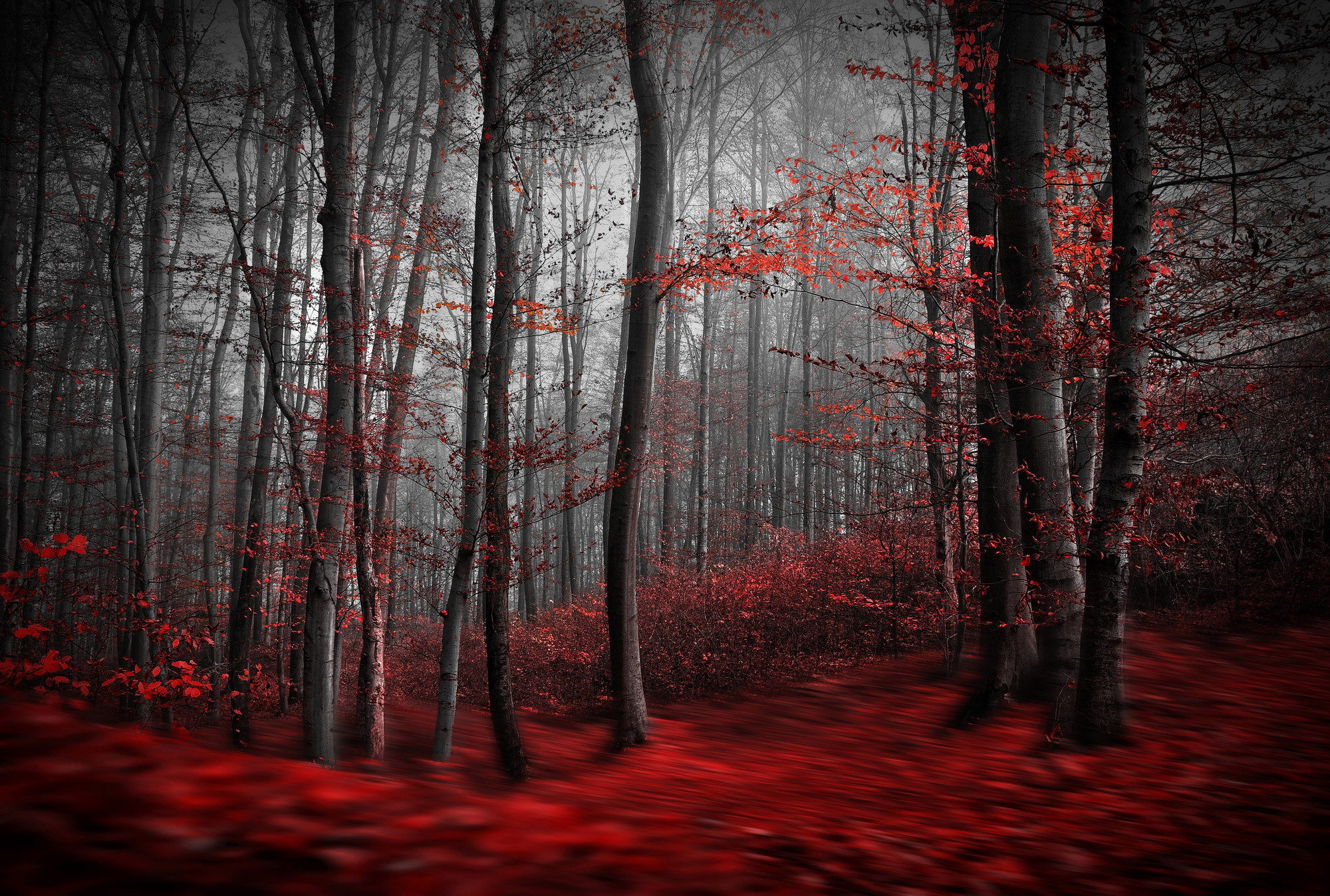 Creepy Forest Wallpaper (66+ Images