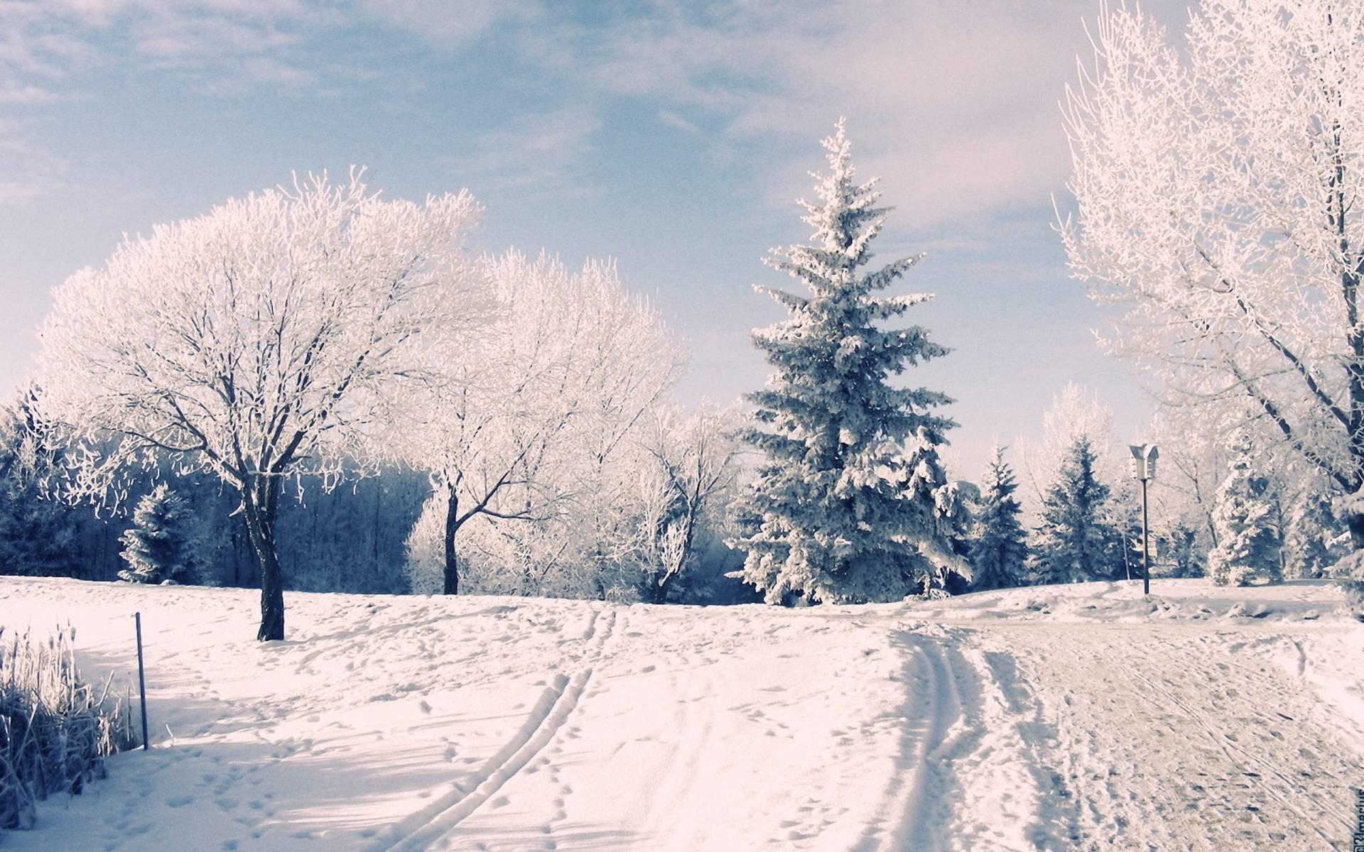Winter Wonderland Background