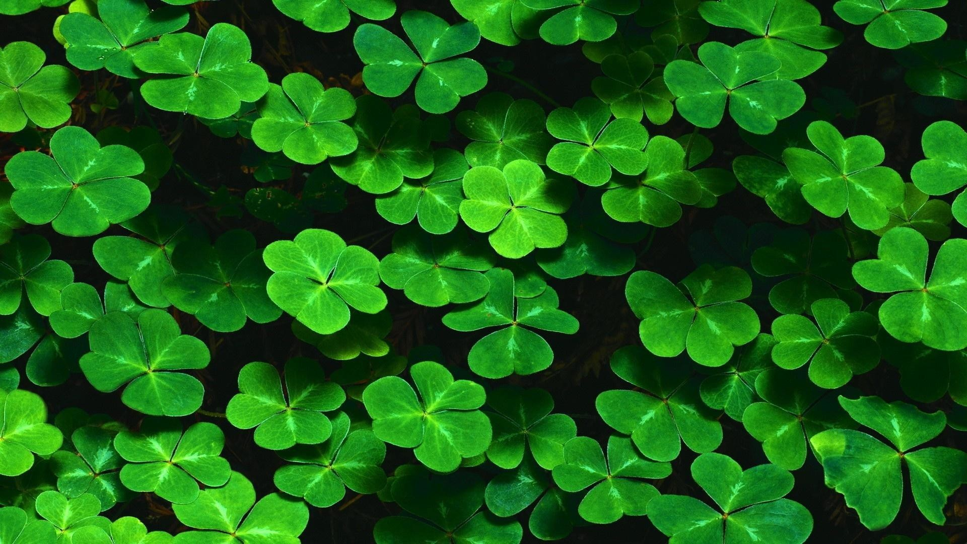 4 Leaf Clover Wallpaper 46 Images