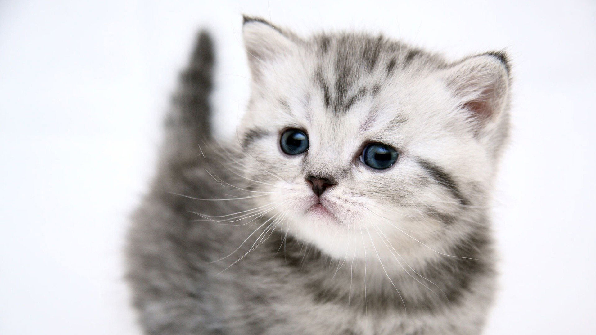 Hd Cat Wallpapers 1920x1080 69 Images: HD Cat Wallpapers (64+ Images