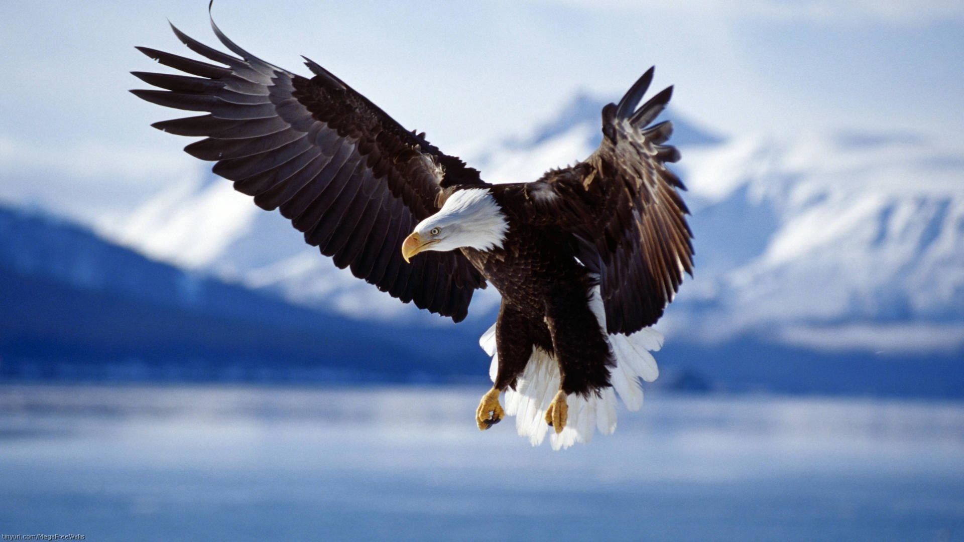 1920x1080 58 Bald Eagle Wallpapers | Bald Eagle Backgrounds