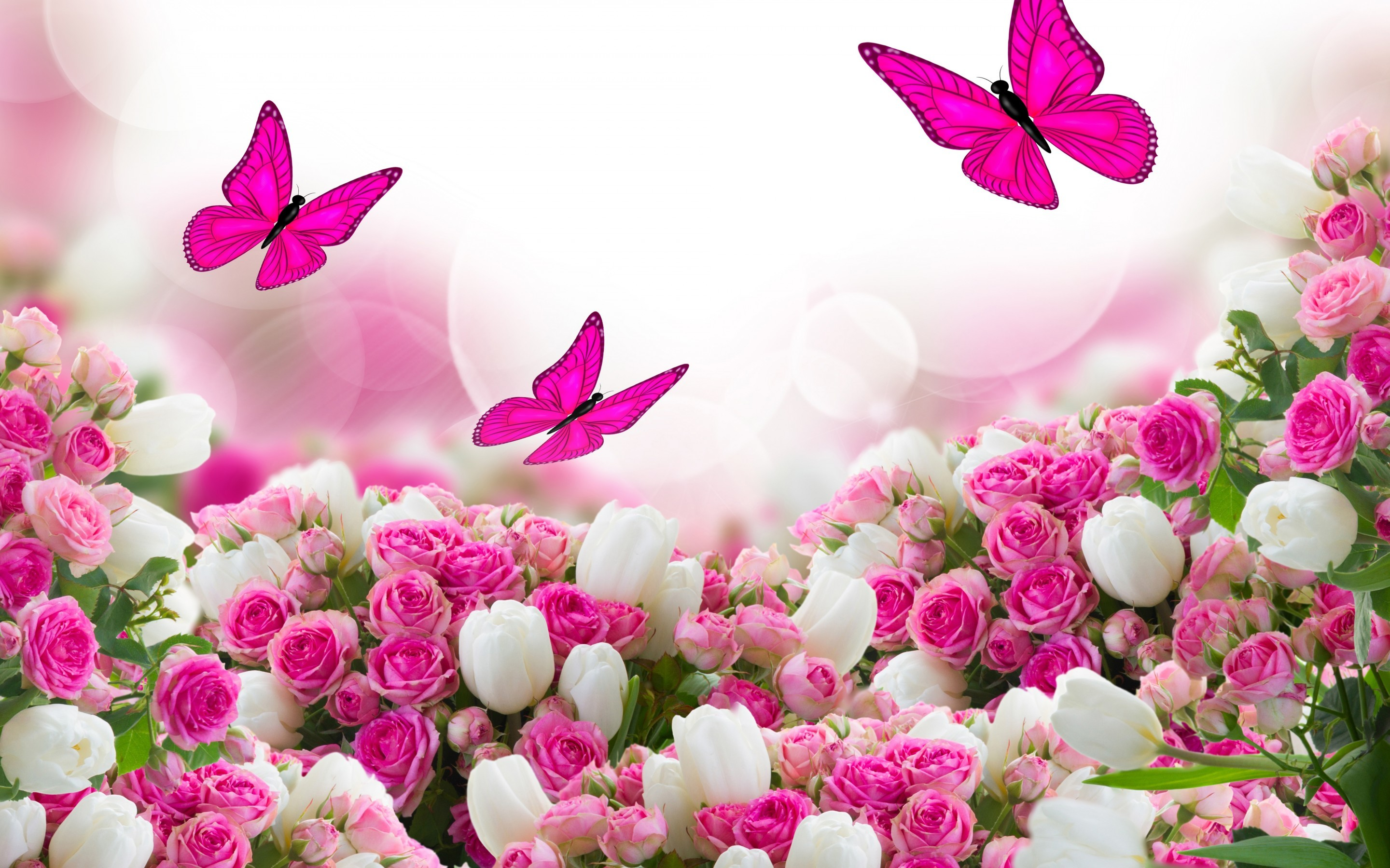 Pink Roses Wallpaper 64 Images