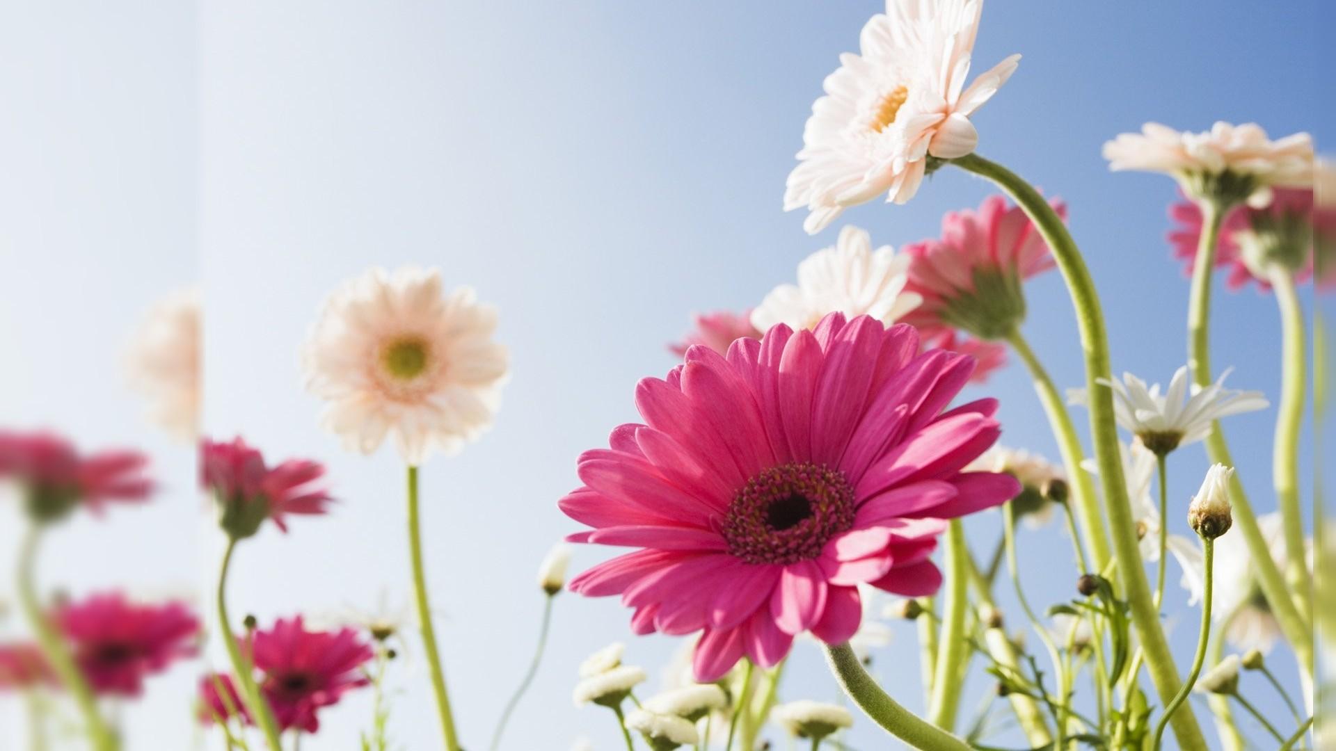 May Flowers Wallpaper Hd Desktop 66 Images