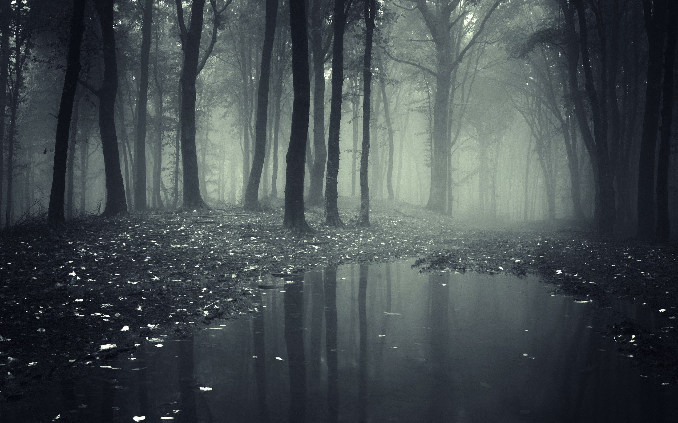2880x1800 Creepy Dark Forest