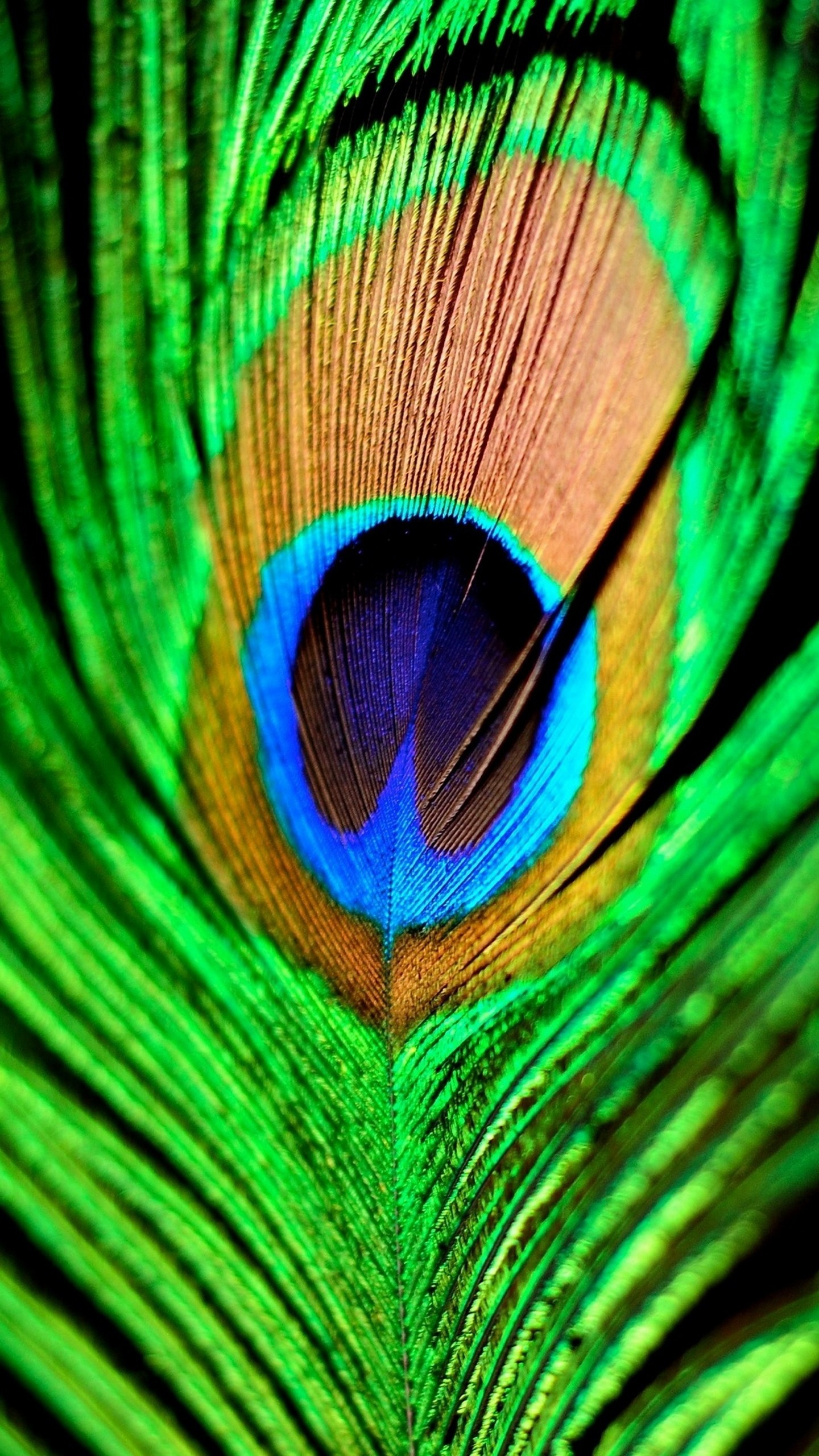 1440x2560 quad hd mobile phone wallpapers  peacock feather