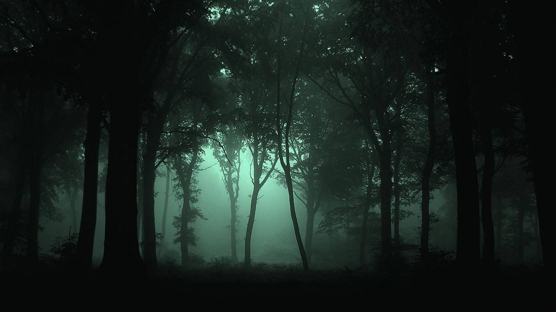 1920x1080 Dark Forest Wallpaper Mobile