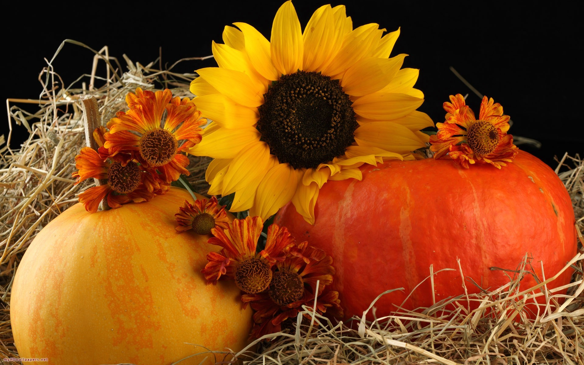 Autumn Pumpkins Desktop Wallpaper (50+ images)