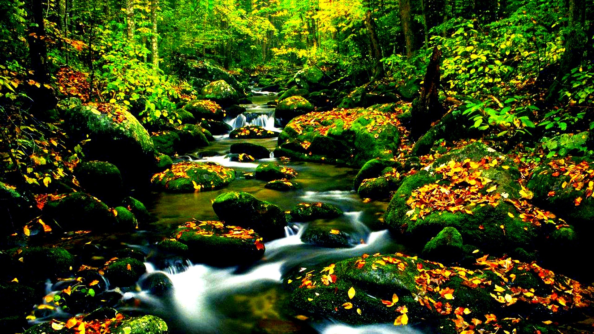 1920x1080 forests water nature colors woods trees lovely beautiful fall river  wallpapers[]