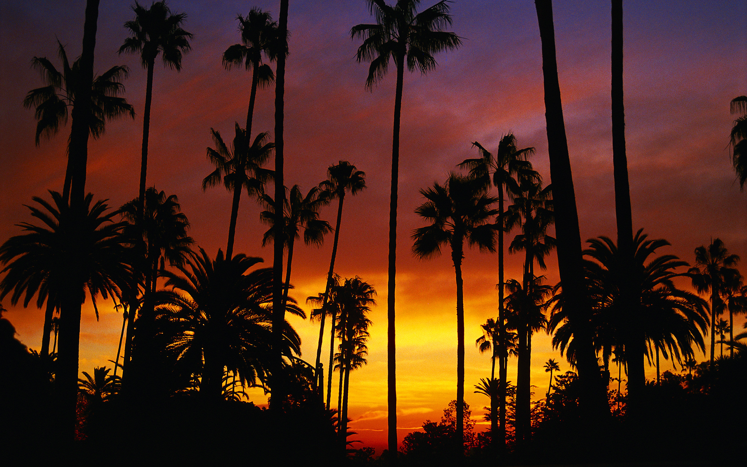 California Palm Trees Wallpaper 48 Images