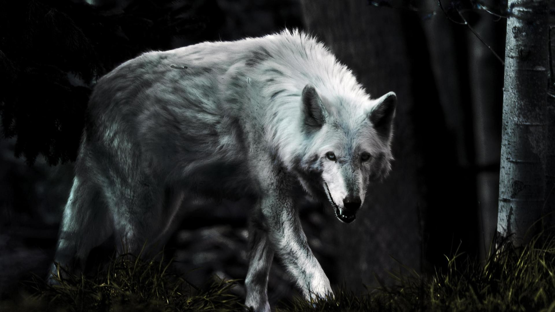 1920x1080 GZL Wolves Wallpaper Widescreen Wallpapers On