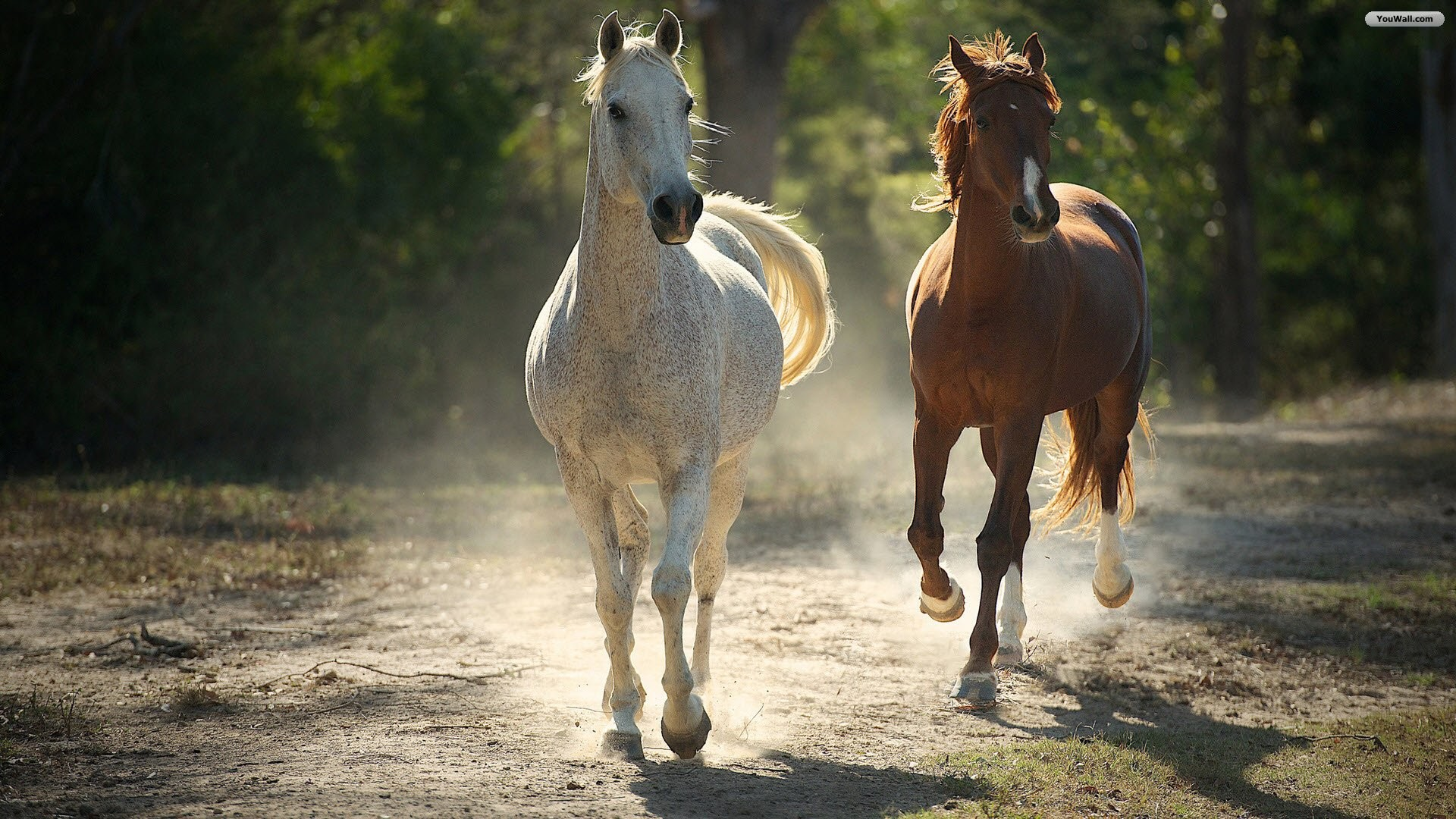 Running Horses Wallpaper (63+ images) - photo#38