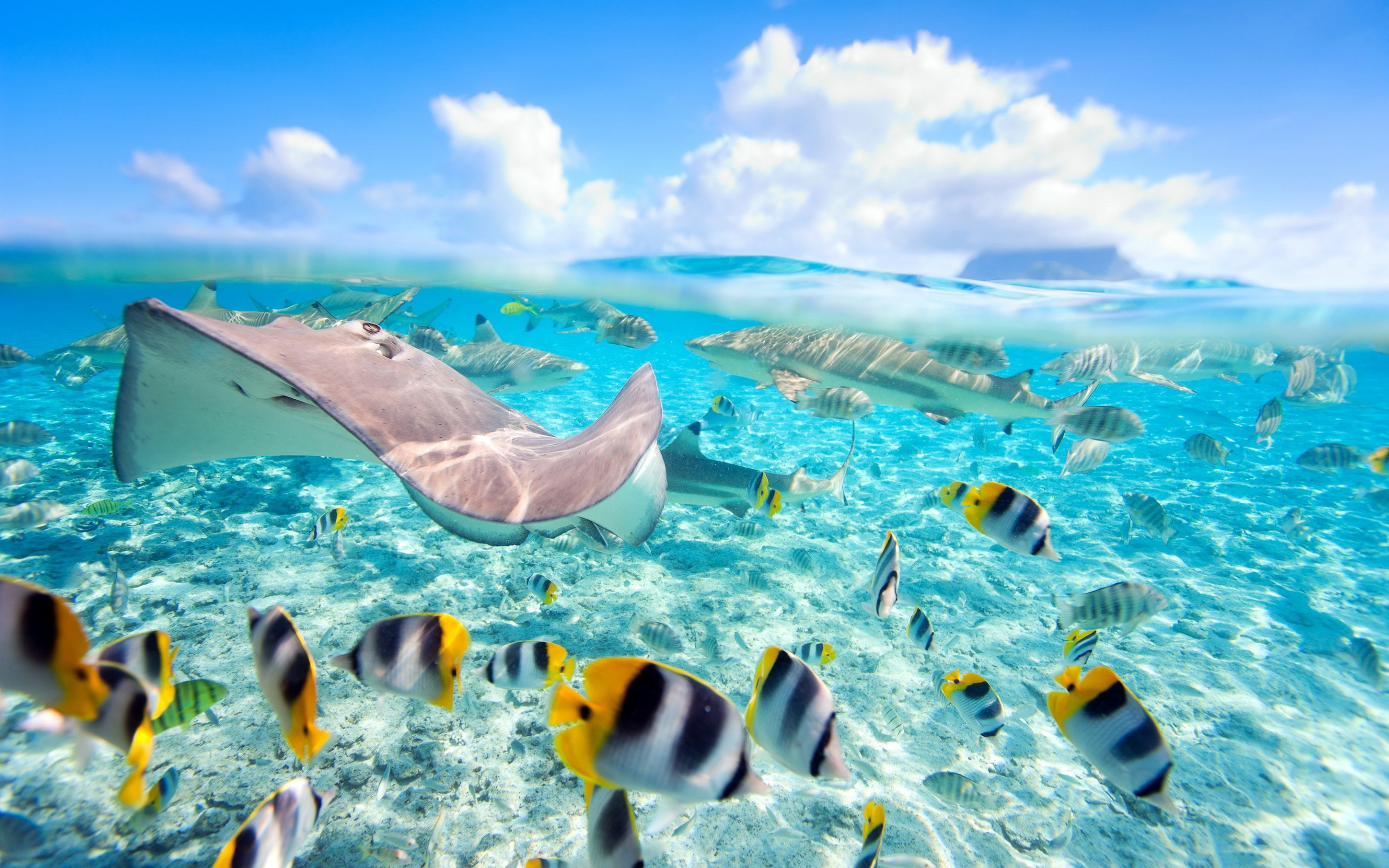 Tropical island wallpaper with fish 49 images for Tropic fish hawaii
