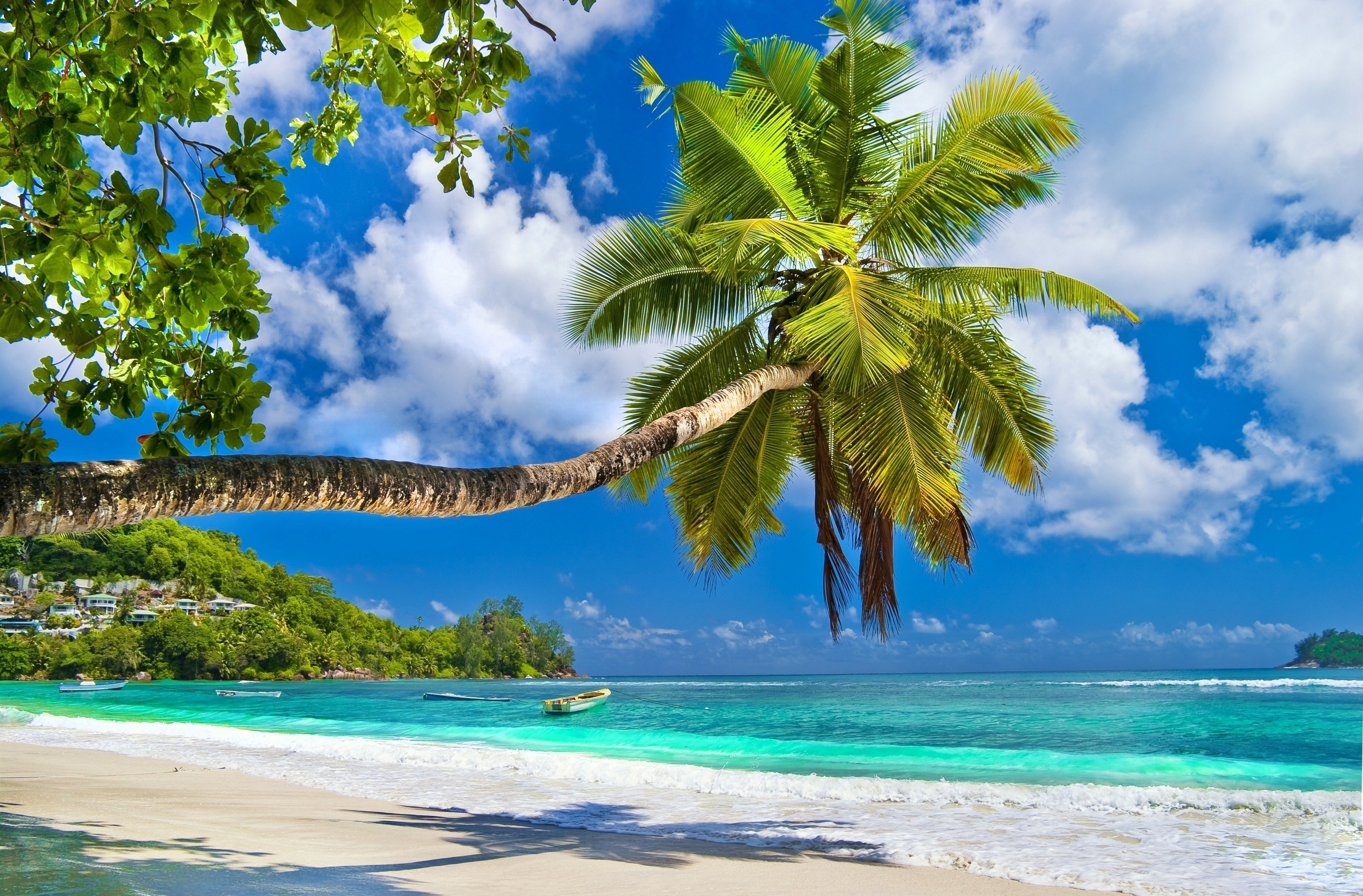 10 Most Popular Beautiful Beach Backgrounds Palm Trees: Beach Wallpaper For Computer (54+ Images