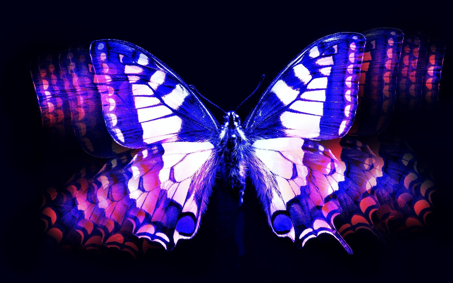 1920x1200 Blue and pink butterfly wallpaper
