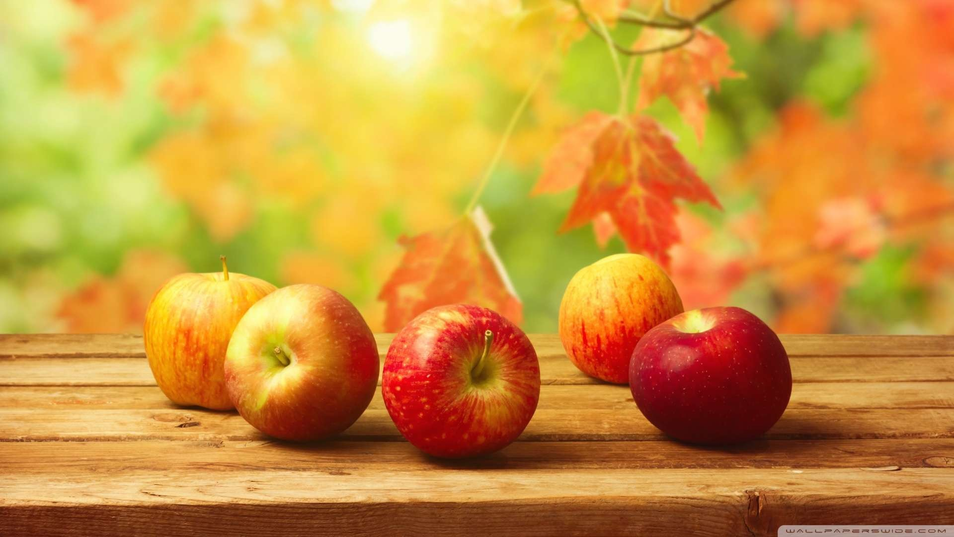 1920x1080 Wallpaper: Fall Apples Wallpaper 1080p HD. Upload at January 12, 2014 .