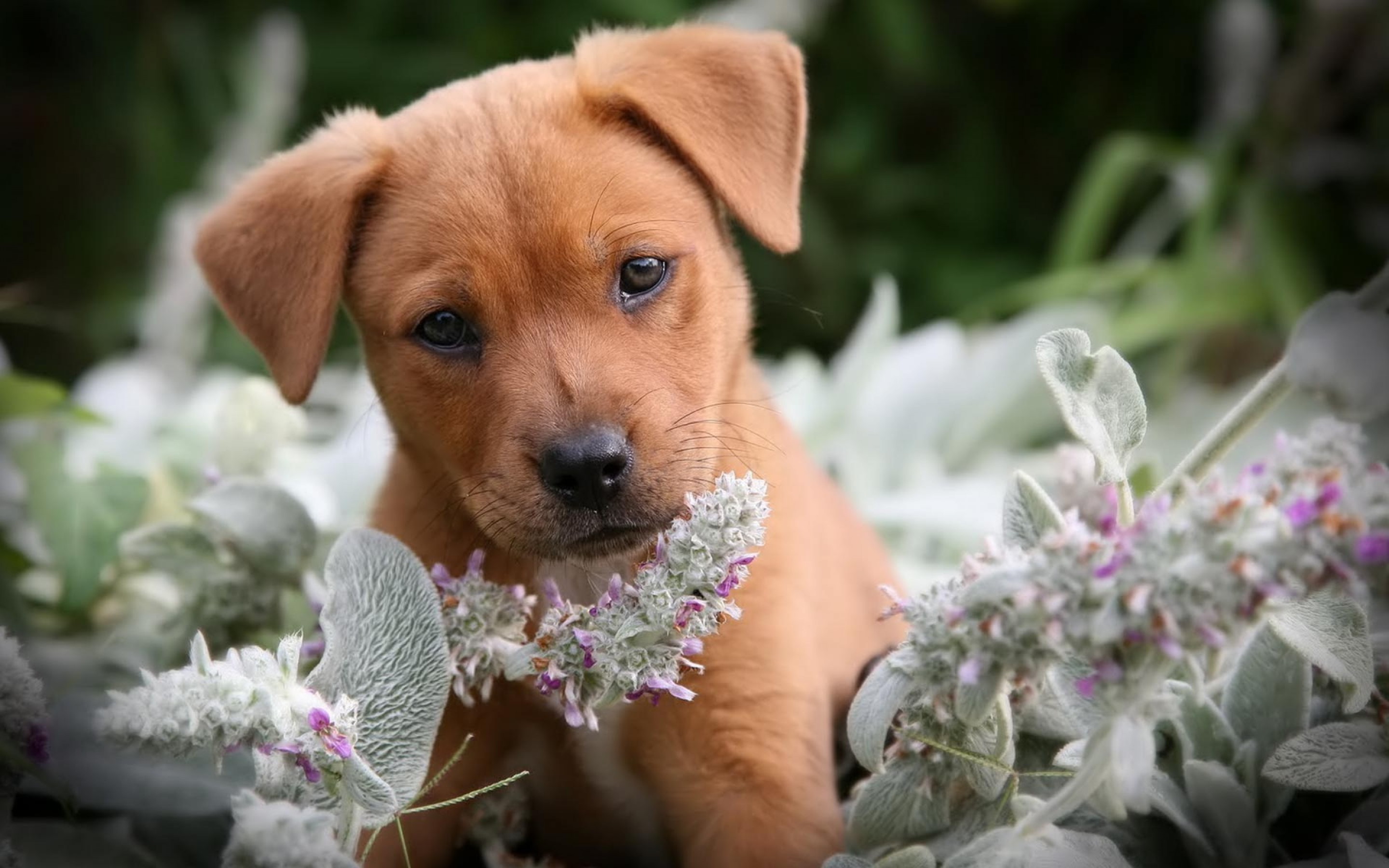 Cute Puppy Wallpapers For Desktop (58+ Images