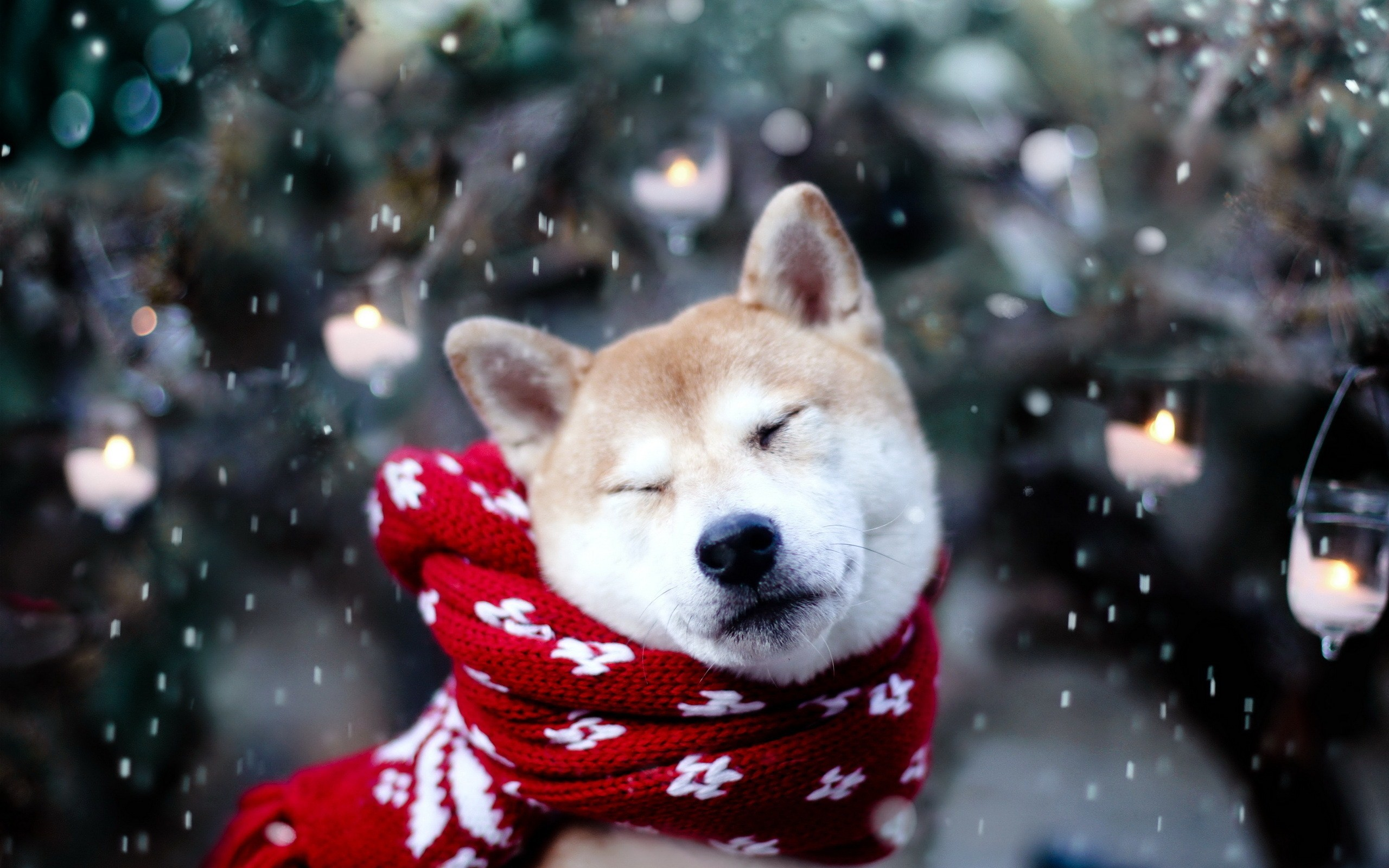cute winter animal wallpaper (48+ images)