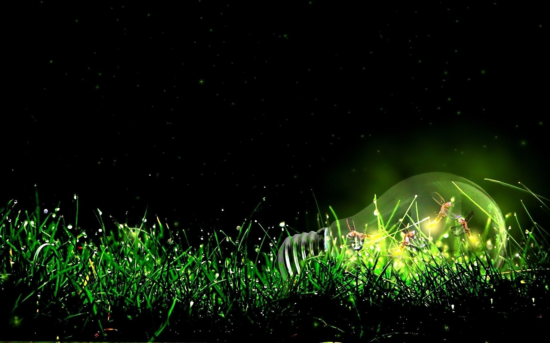 1920x1200 Insects Bulb Light Grass