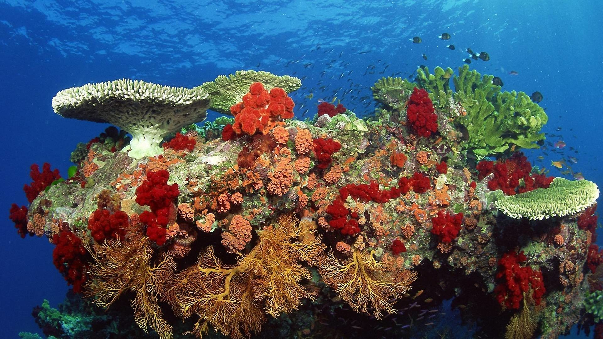 1920x1080 Beautiful Coral Reef Wallpaper Free