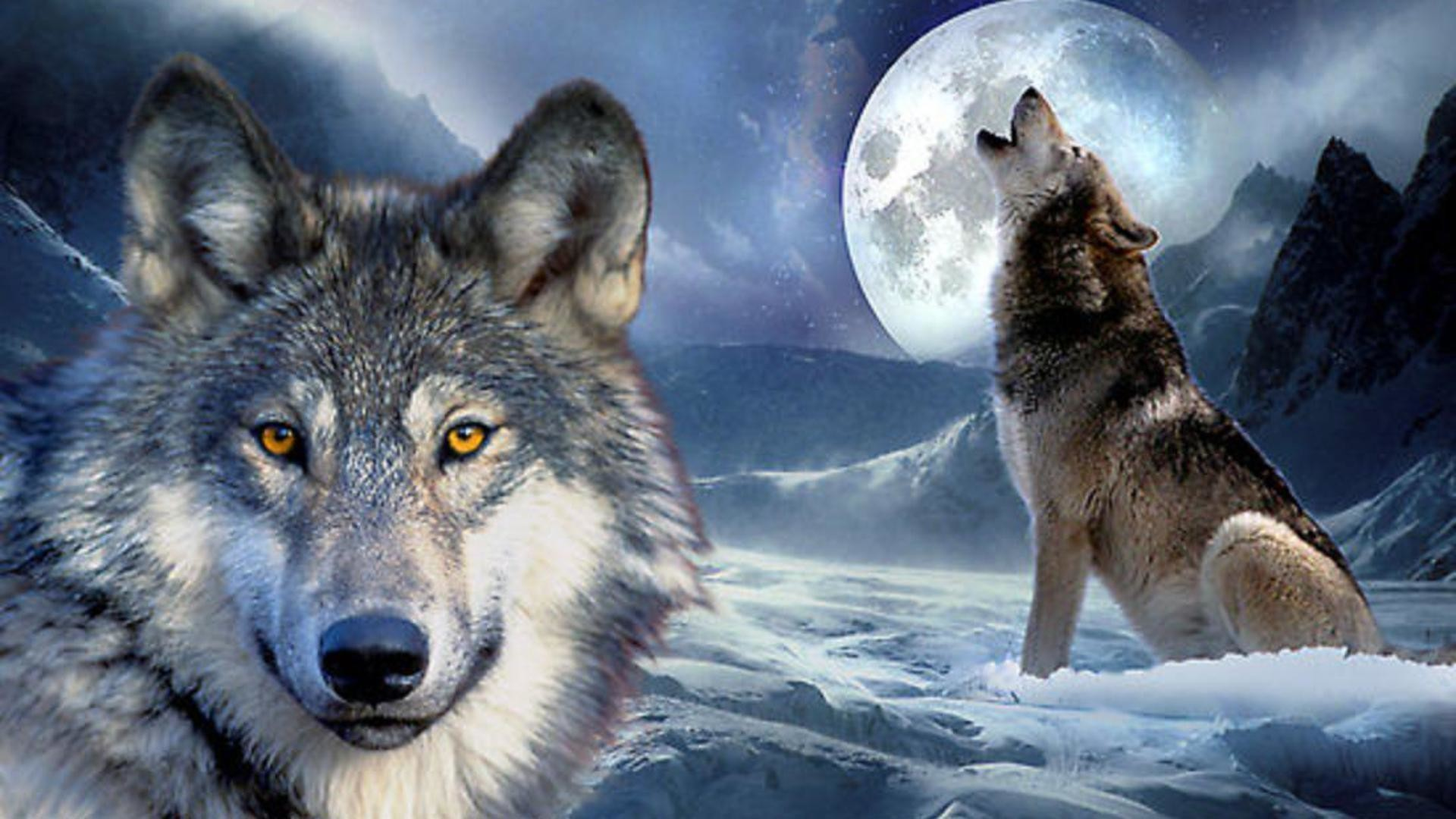 1920x1080 HD Howling At The Moon Wallpaper