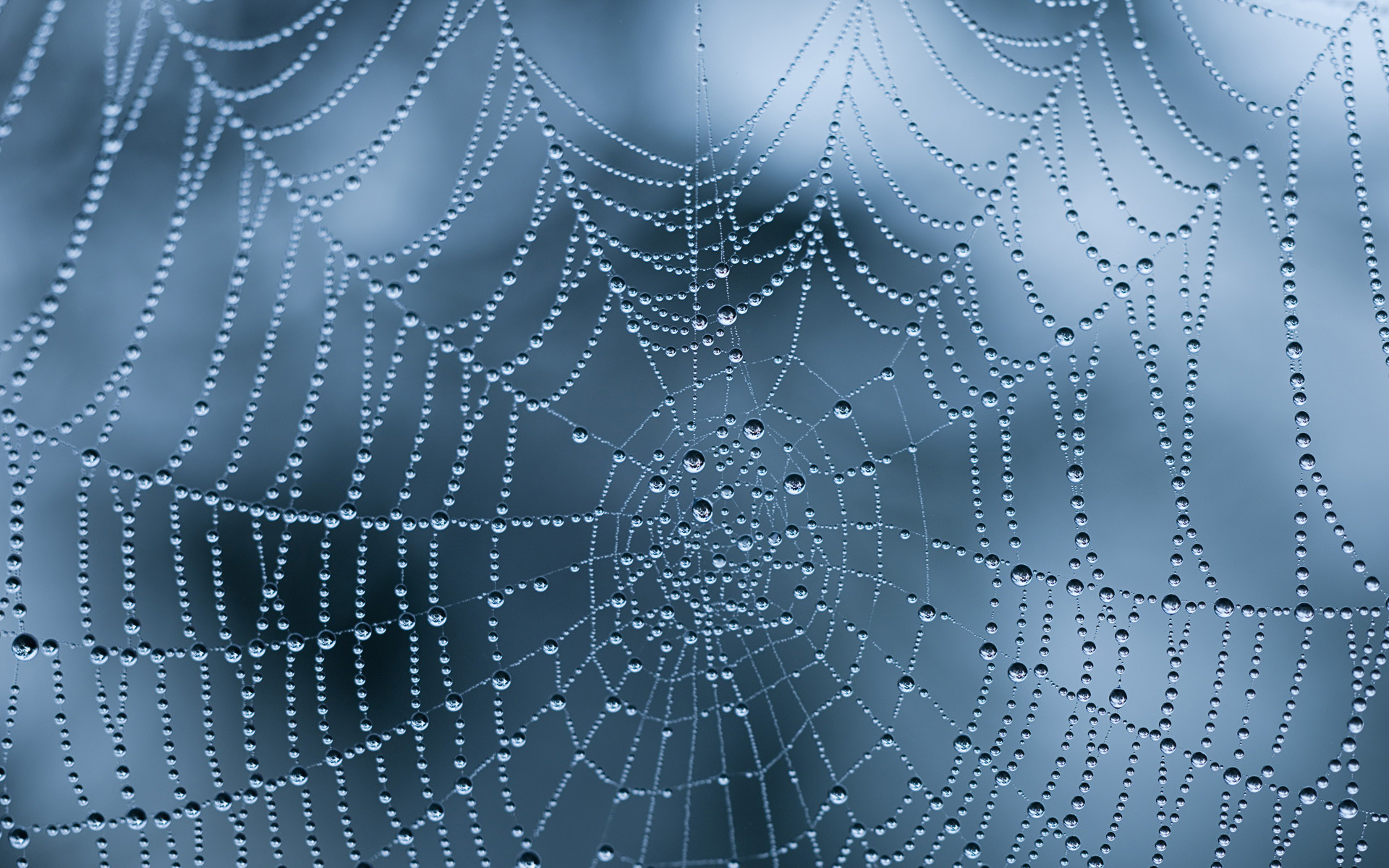 1920x1200 21 Excellent HD Spider Web Wallpapers