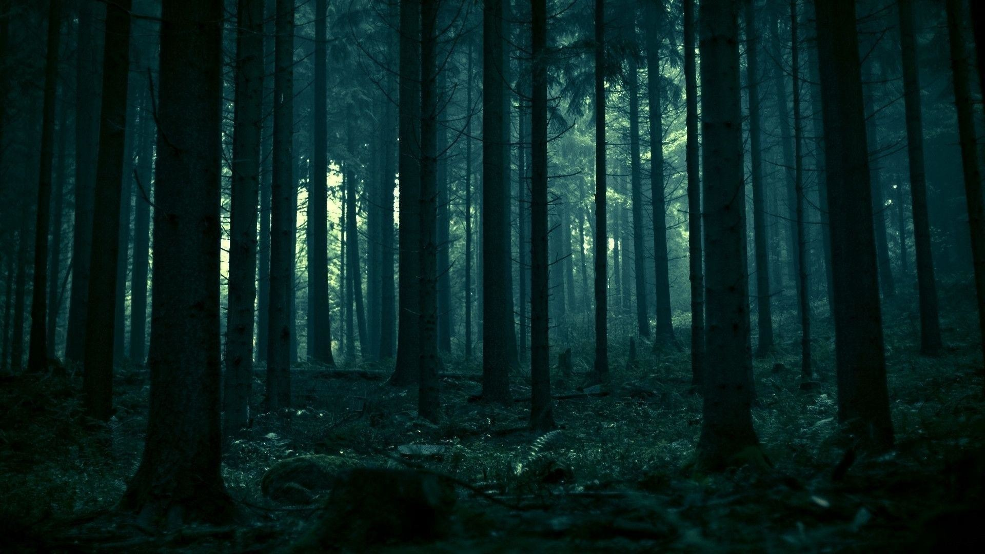 1920x1080 Dark Forest HD Photo Wallpaper - HD Wallpapers